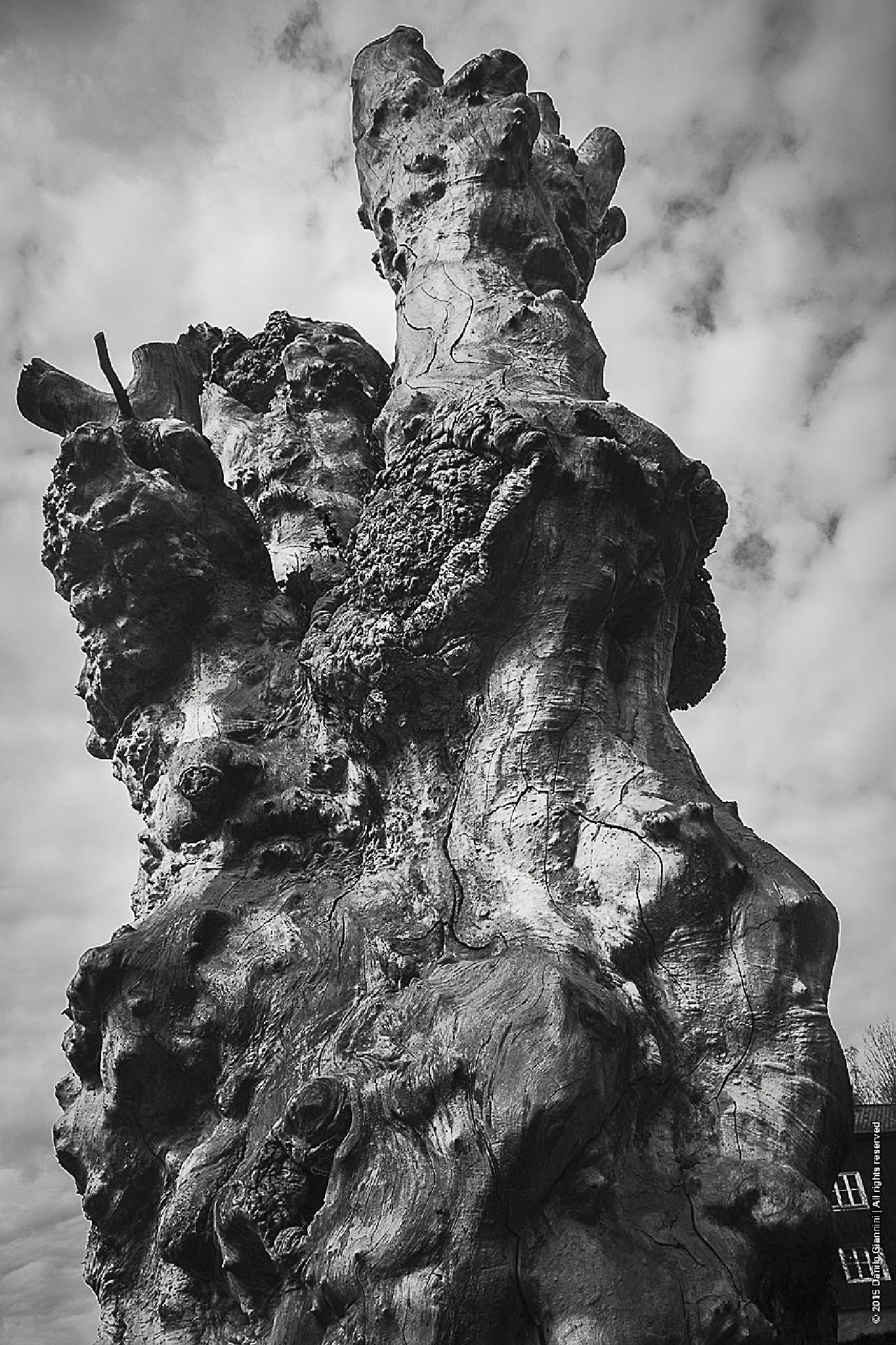 Photo in Black and White #blackandwhitephotography #nature #trees #blackandwhite