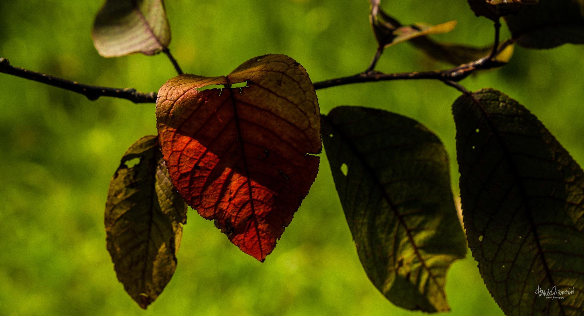 Leaves by Danilo Giannini