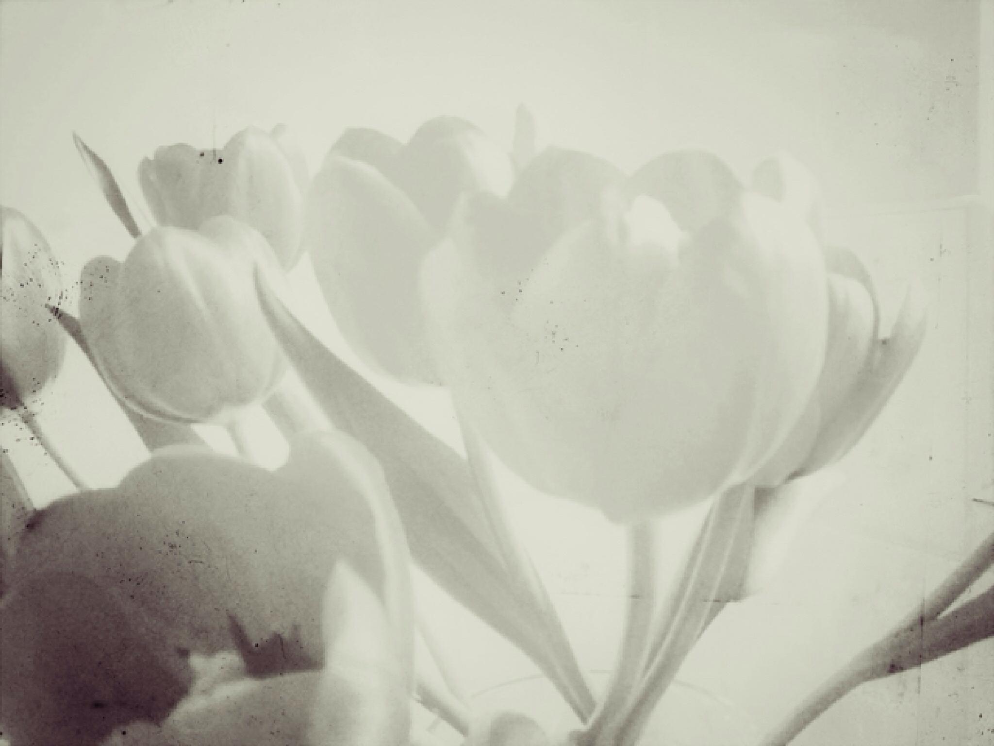 2014-04-07 08 by lisahicks193