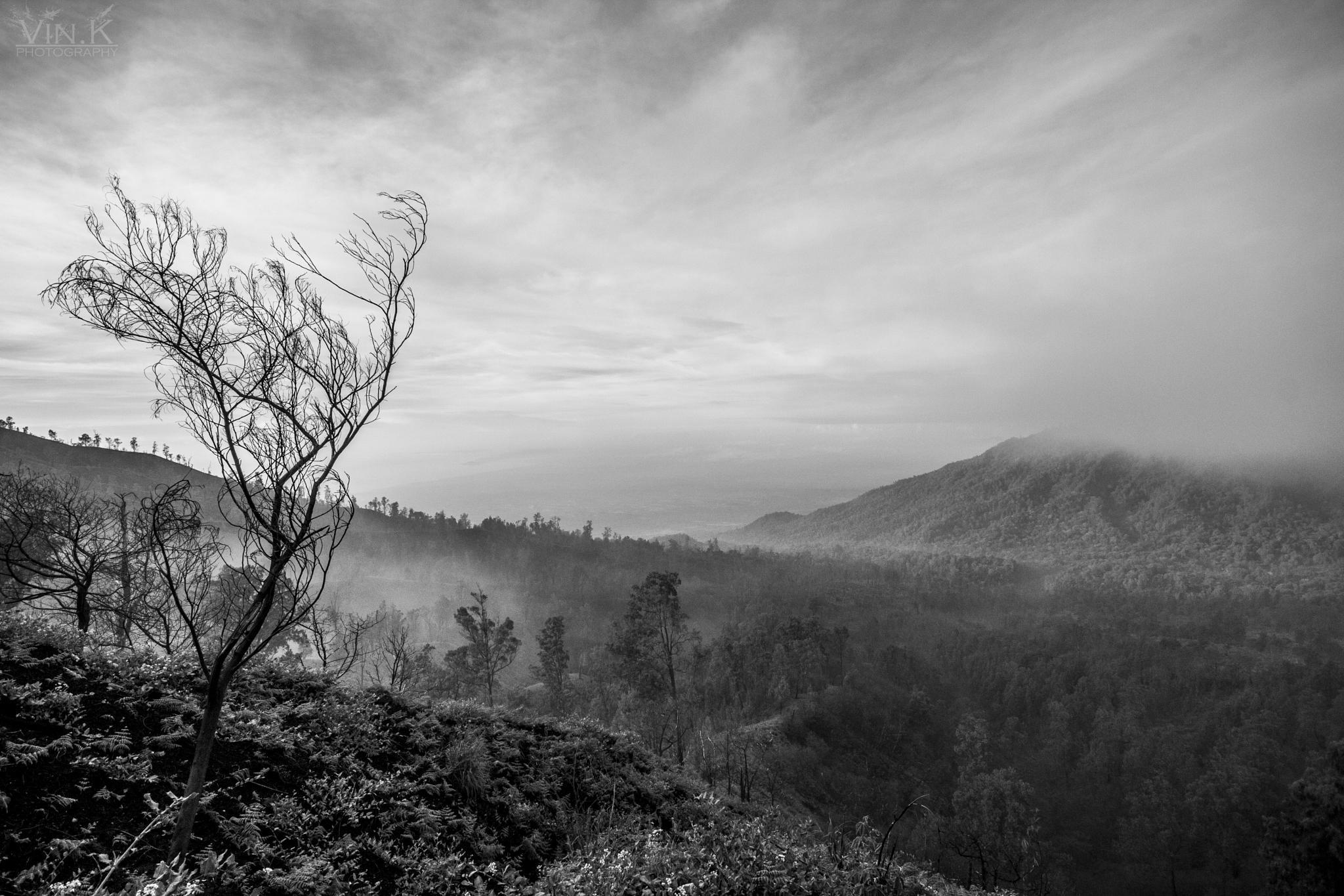 Magical Monochrome Mornings. by Vin.K