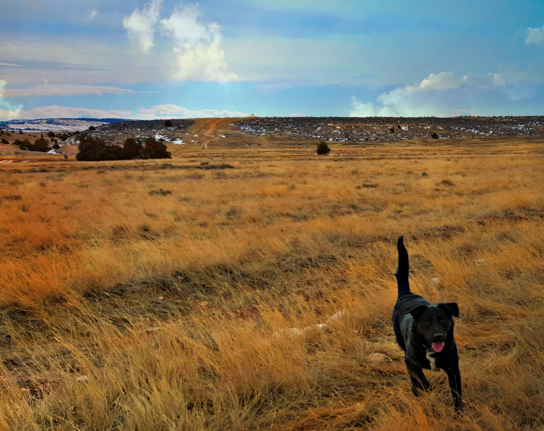 Ace on the Prarie by marta.givens
