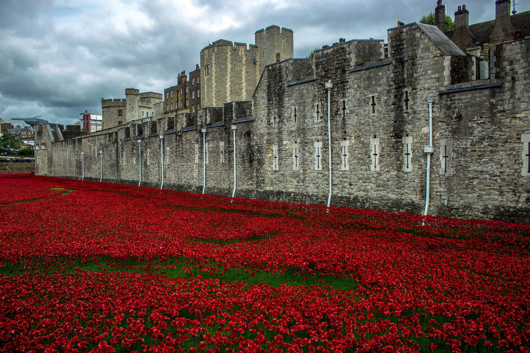 Poppies at The Tower of London, U.K. by Xanthe Towler
