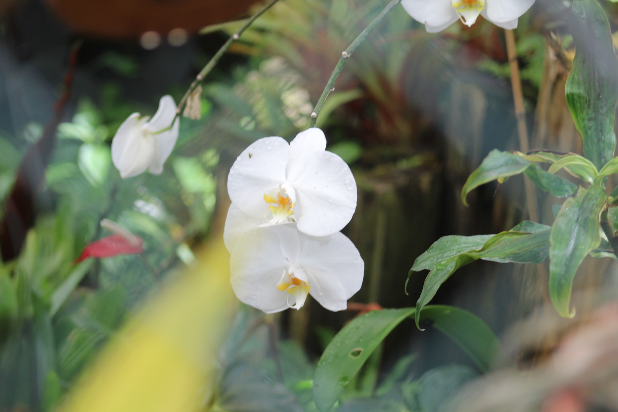 Orchid Pose by Diane.Mumbower
