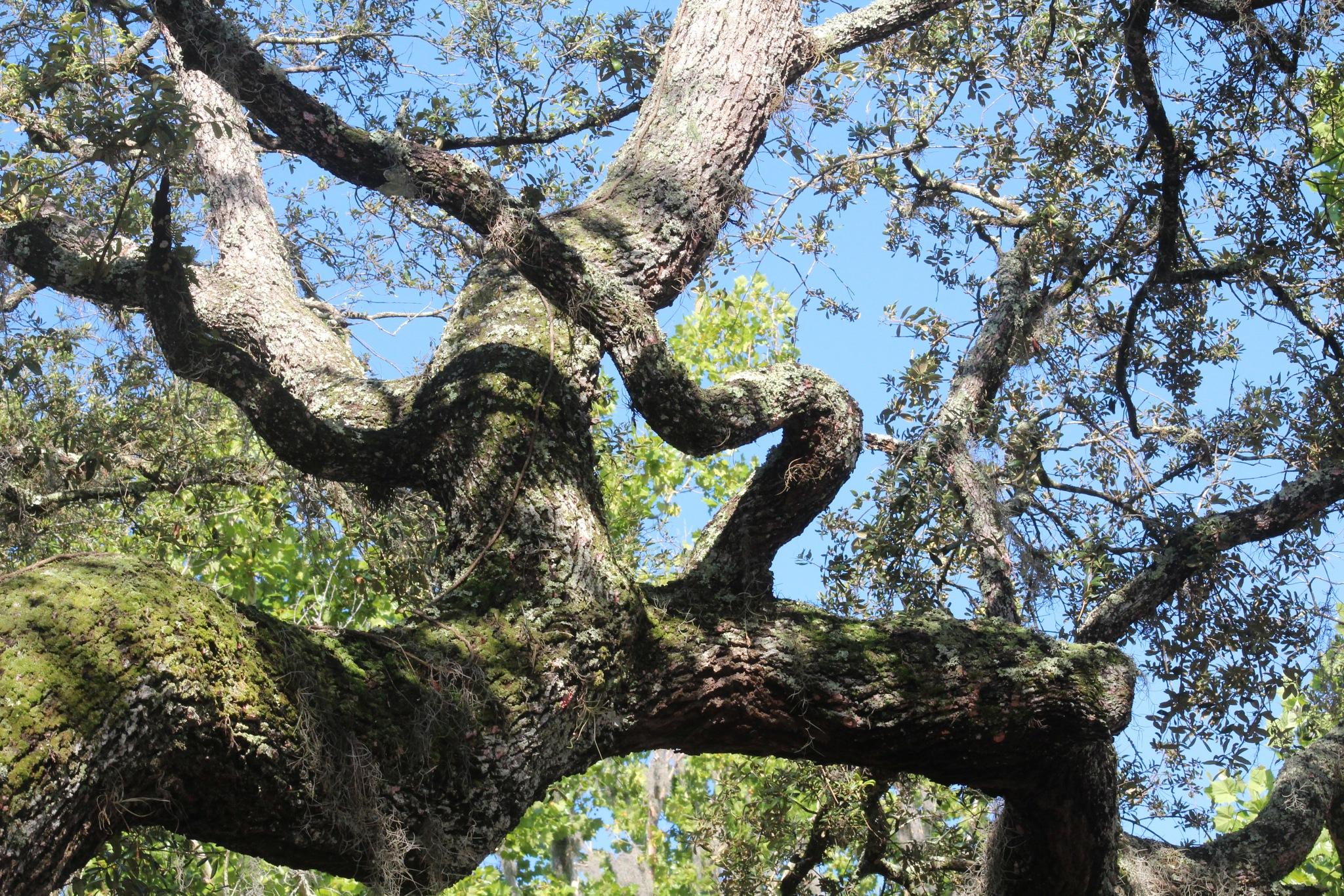 Heart Tree by Diane.Mumbower