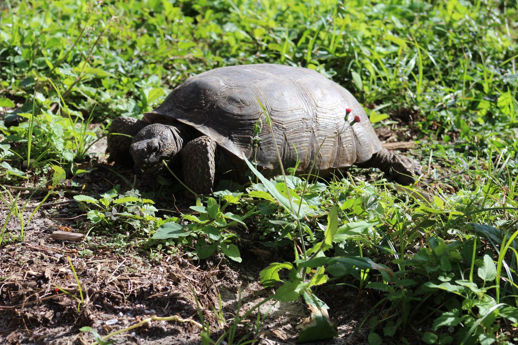 tortoise by Diane.Mumbower