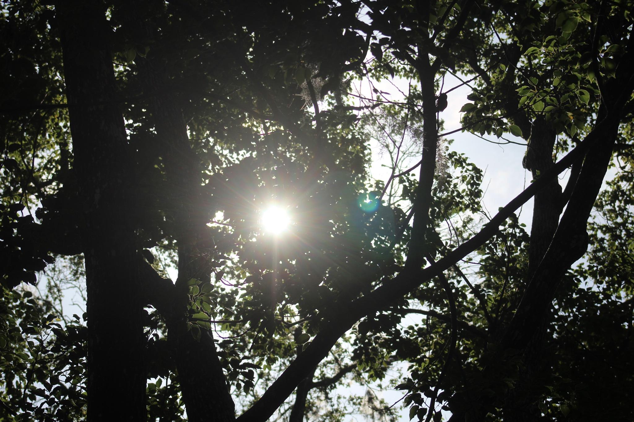 Sun Star by Diane.Mumbower