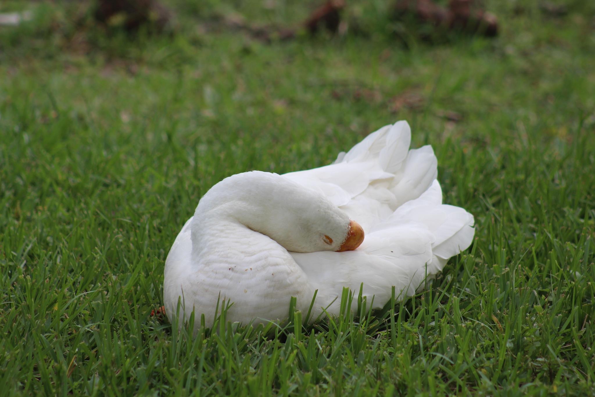 Resting  by Diane.Mumbower