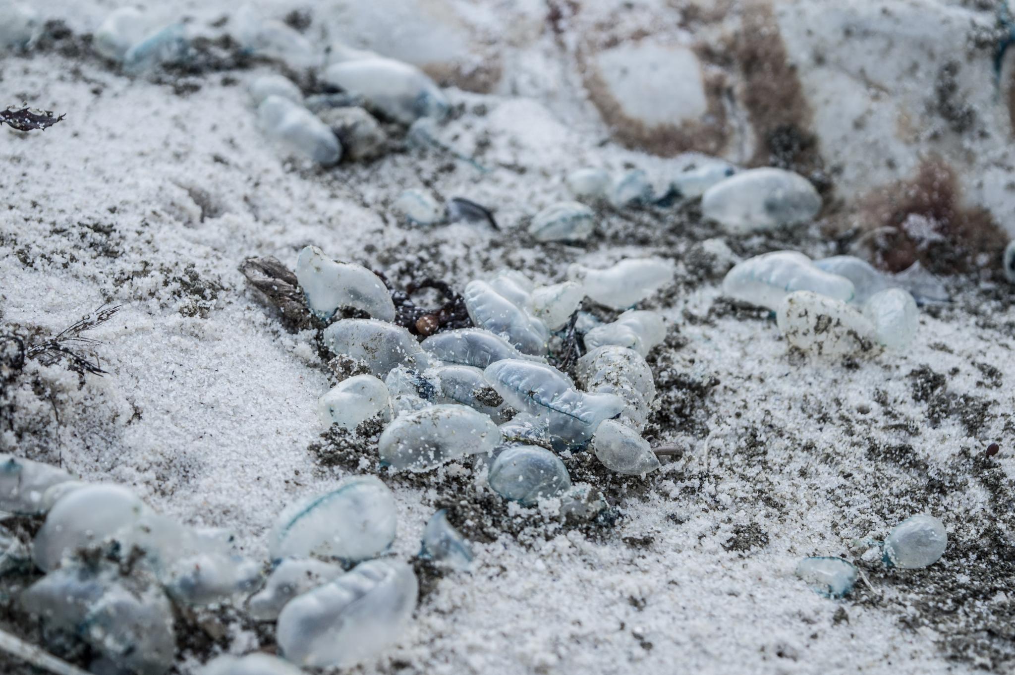 Blue Bottles by Bernard Risseeuw