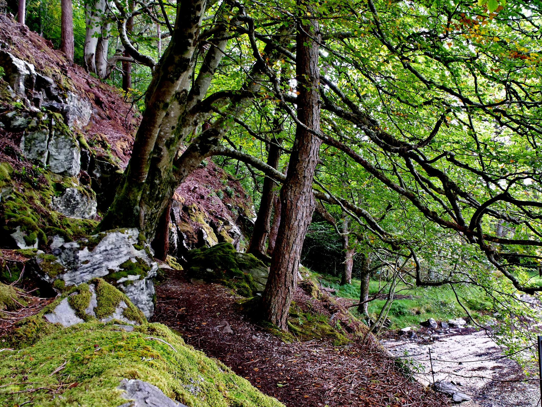 Trees Scotland by barbara.summers1