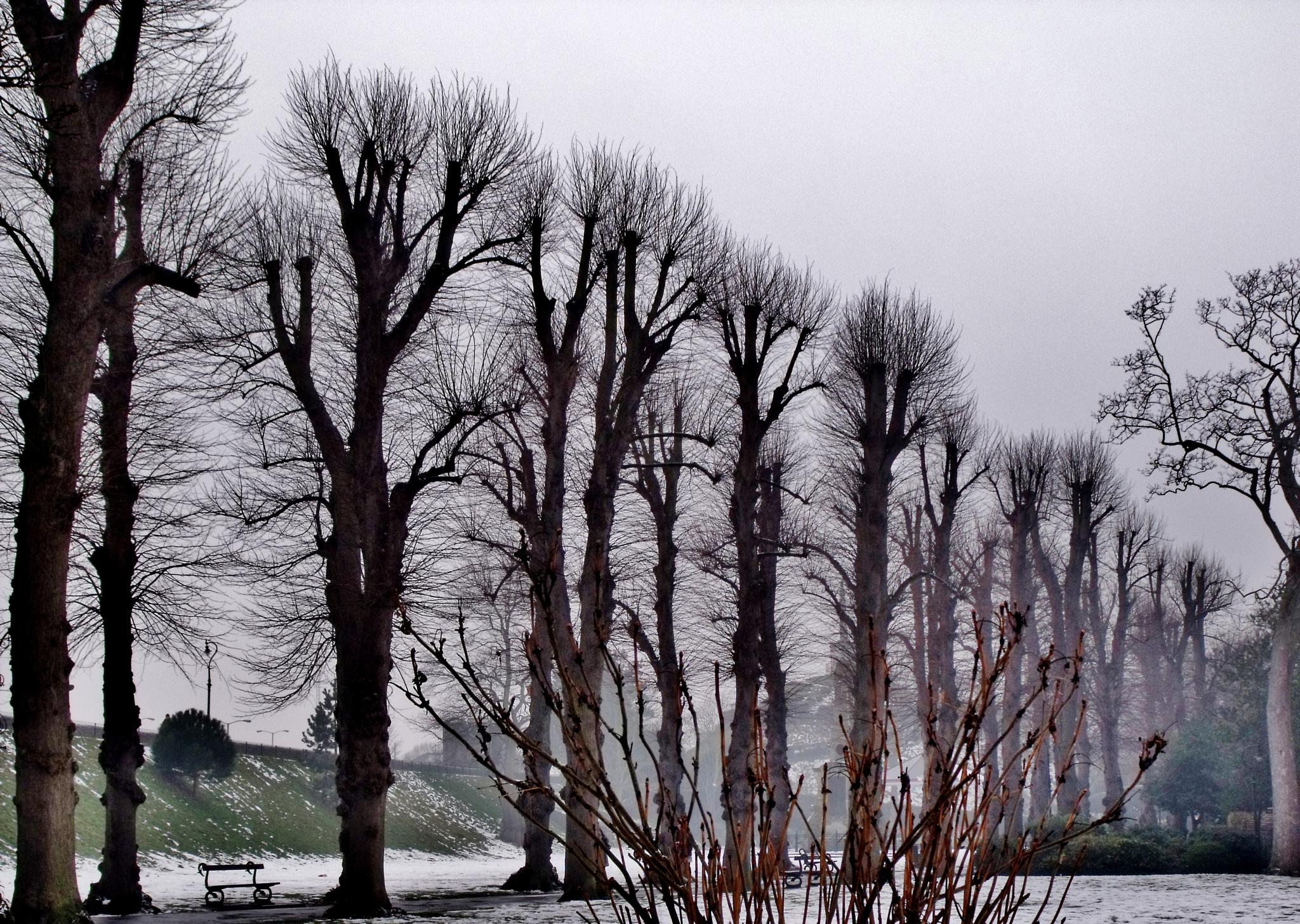 Snow trees by barbara.summers1
