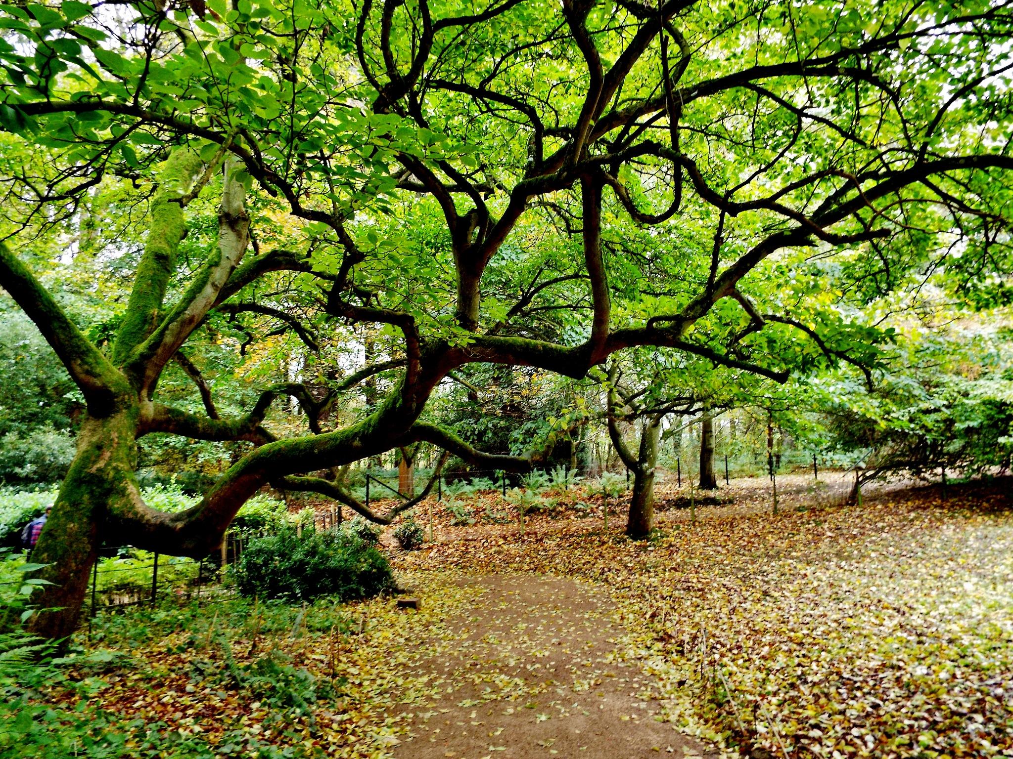 Belsay Gardens by barbara.summers1