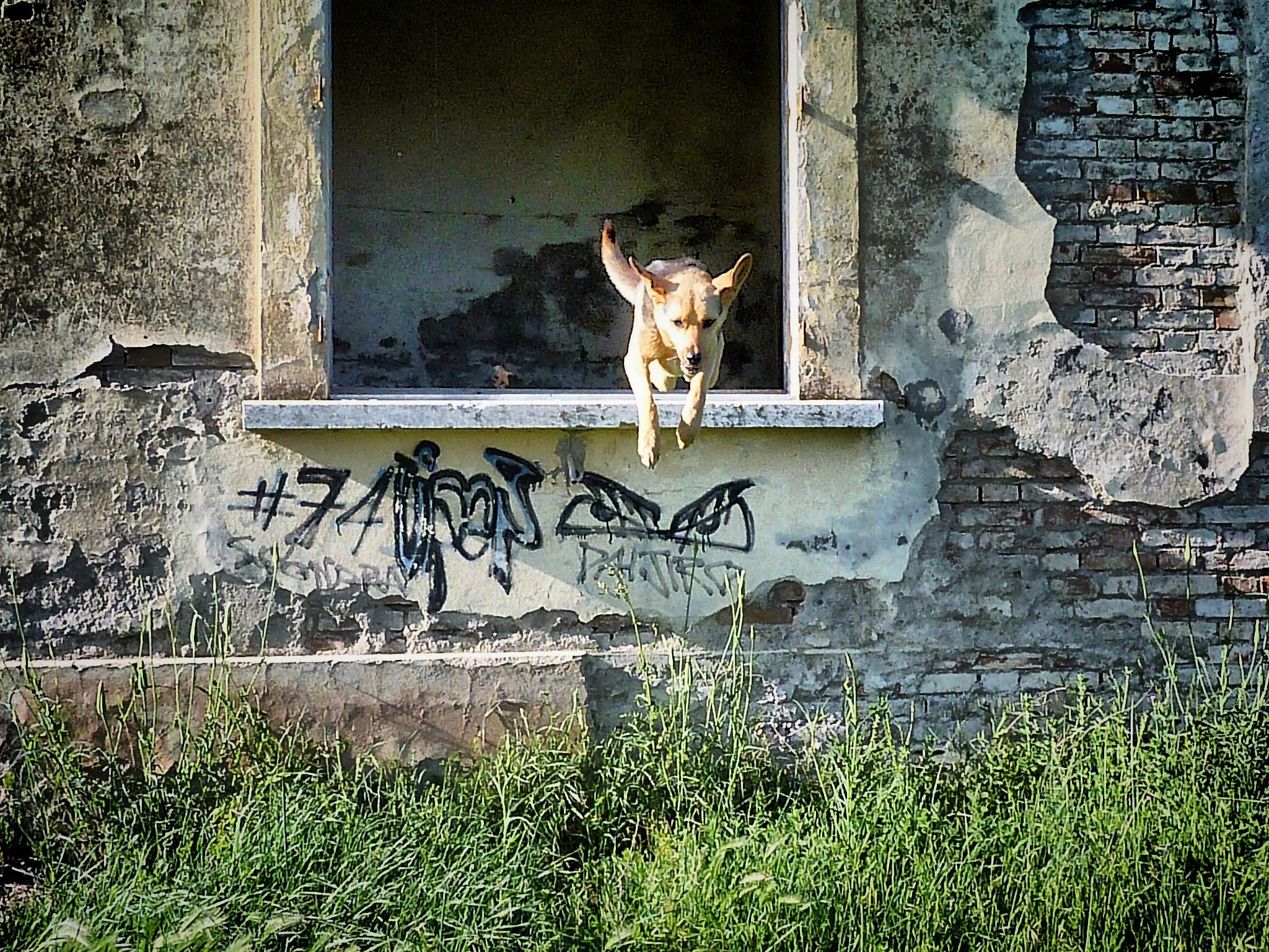 Dog jump by CrisPhotoLive