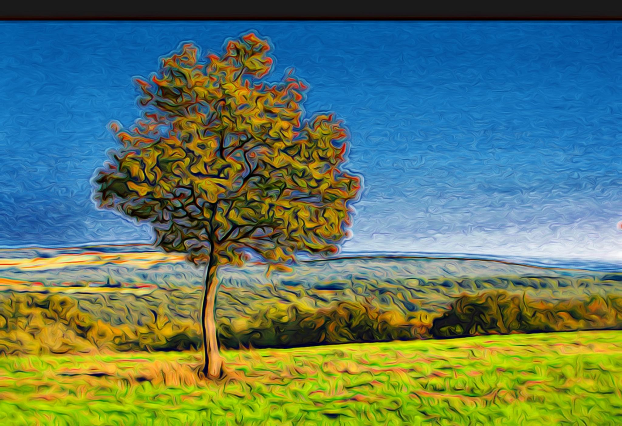 Lonely Tree by stephen.harding.735