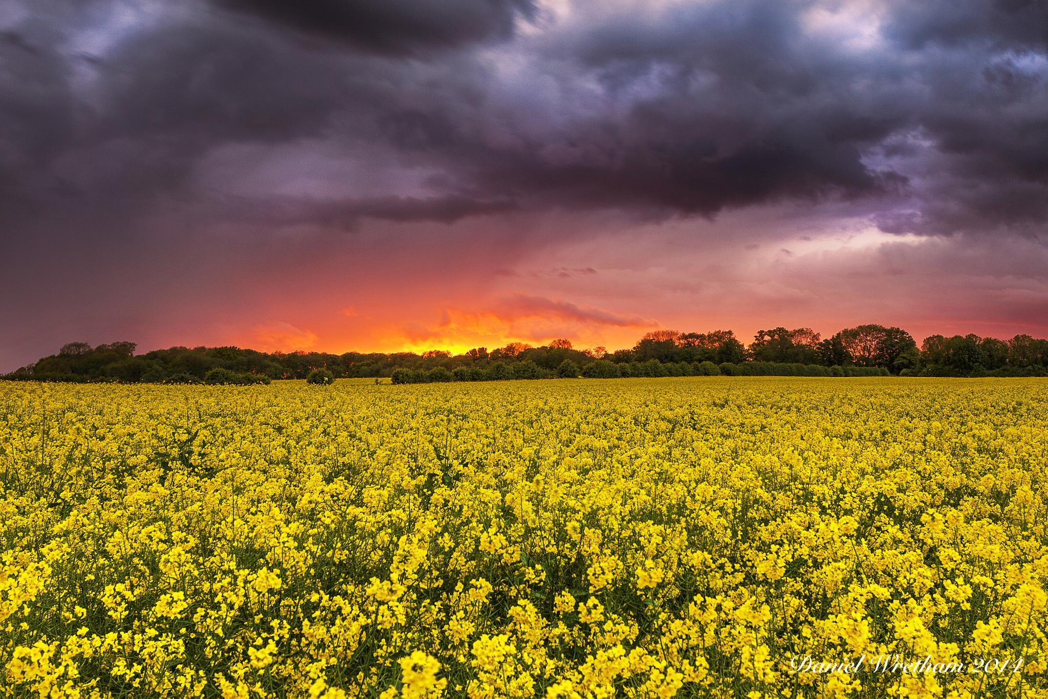 Flower Power by Daniel Wretham Photography
