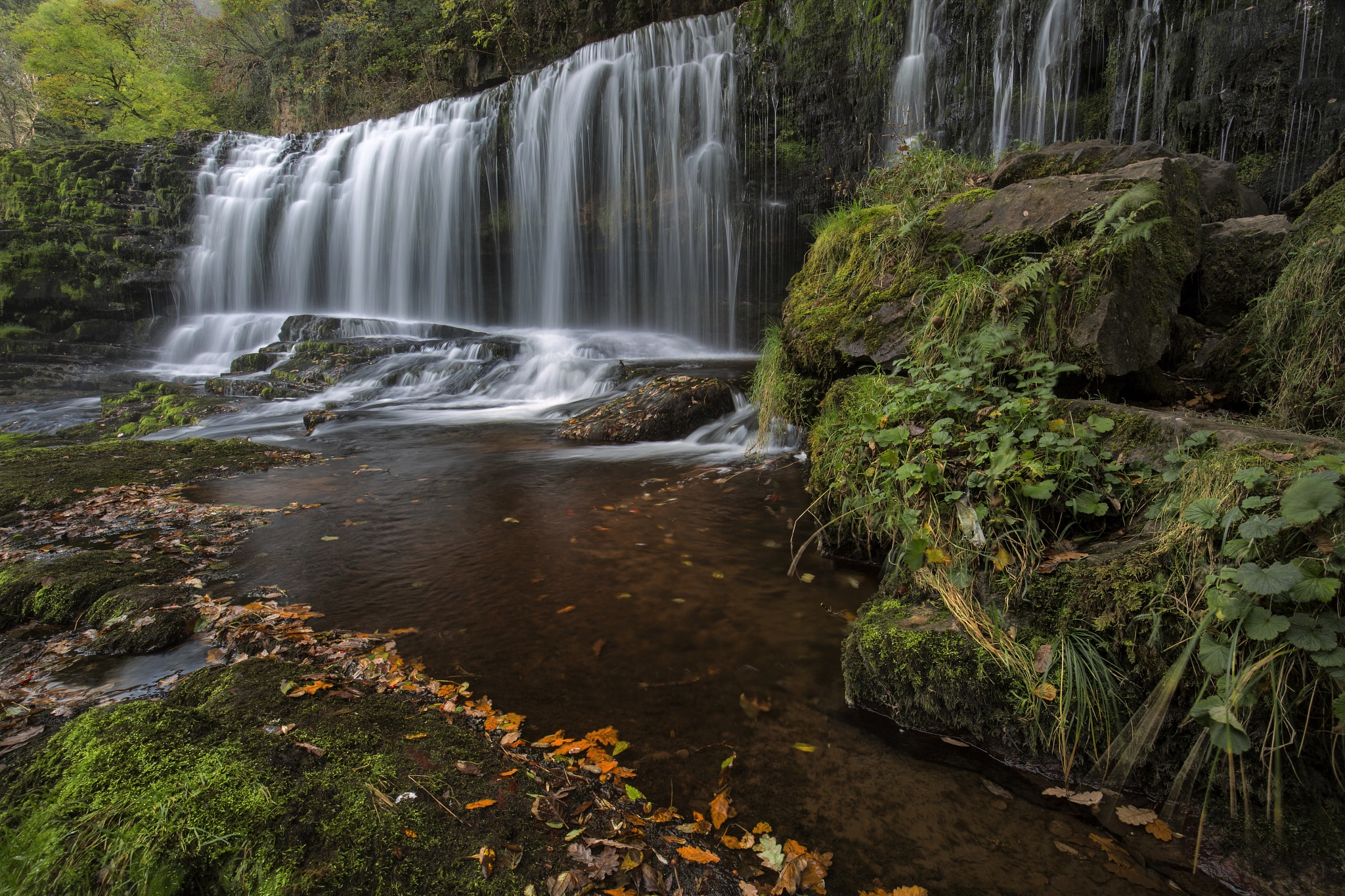 Forest Falls by Daniel Wretham Photography