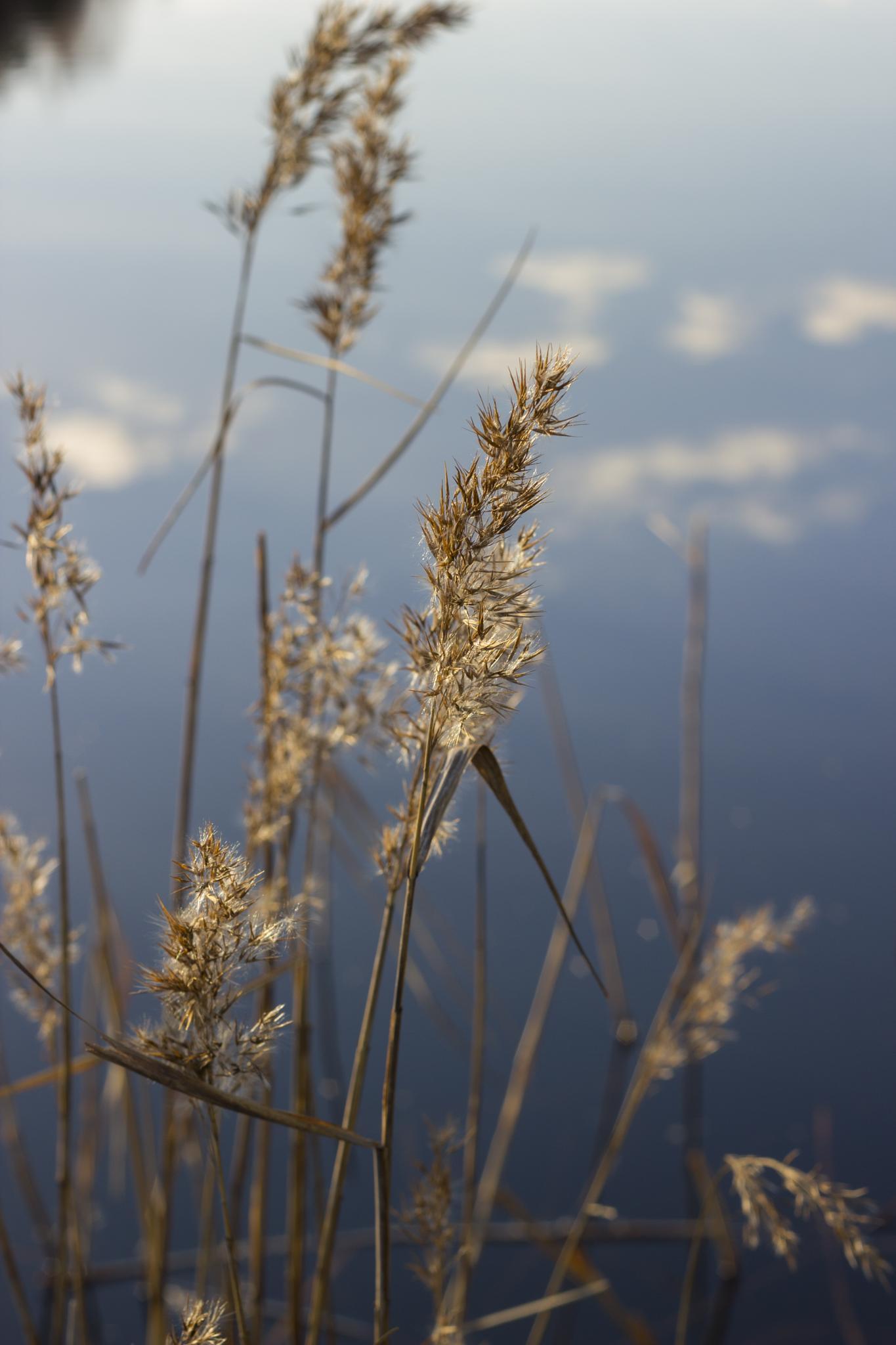 spring feeling by marcus.backlund.5