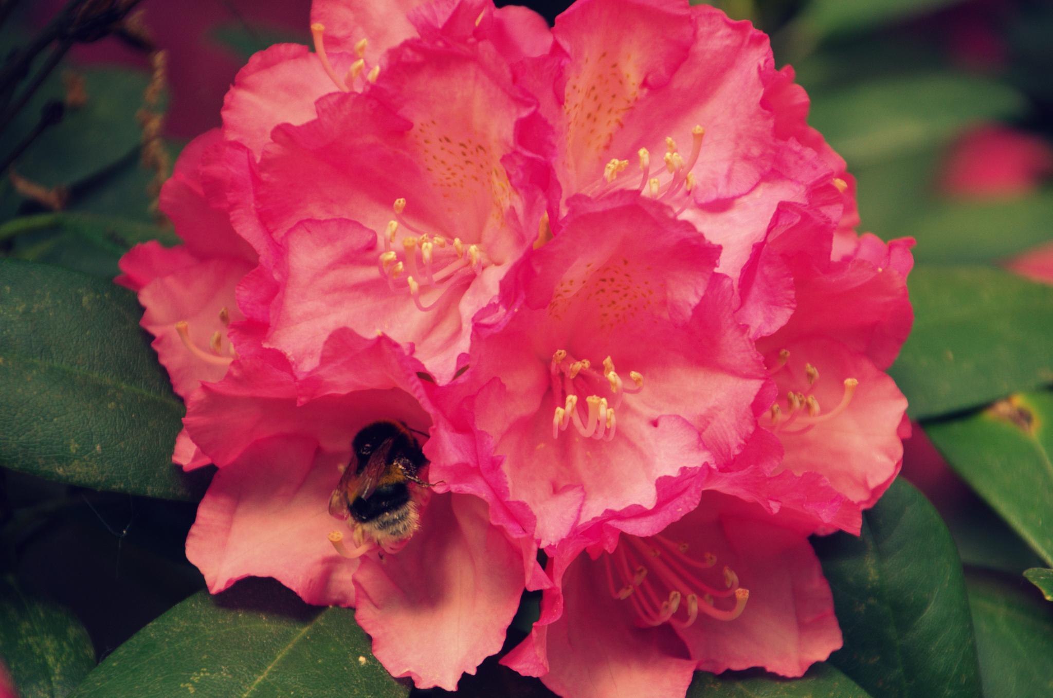 Flora  by raymond.vanharen