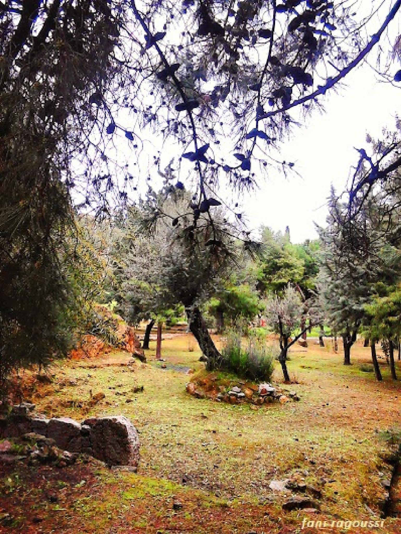 Photo in Random #wood #trees #soil