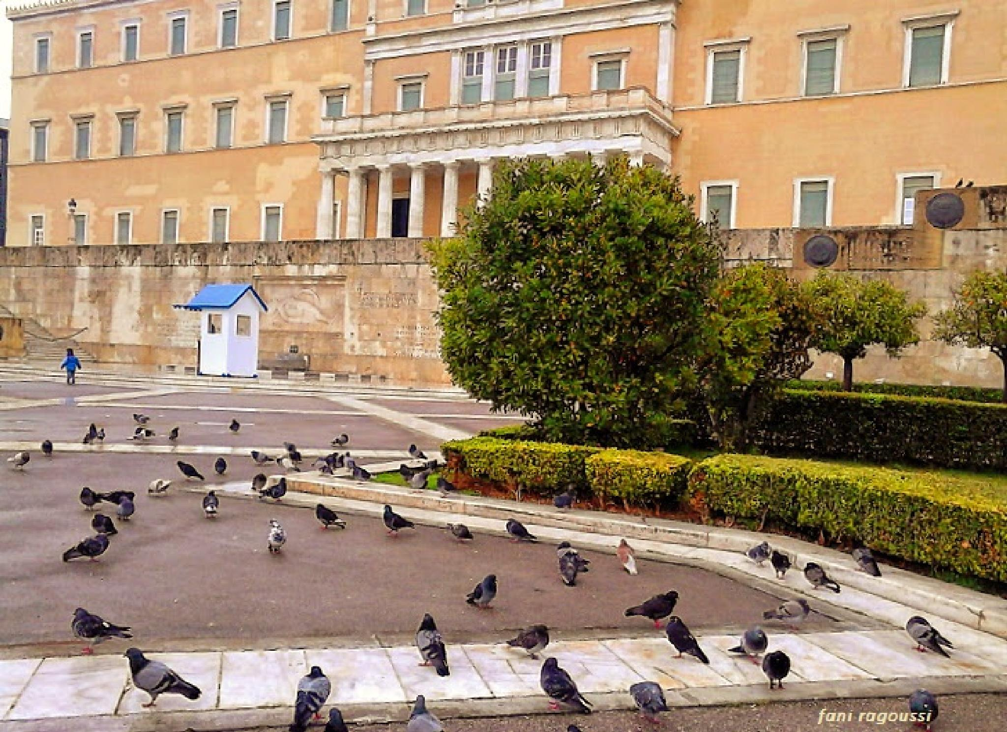 pigeons at Constitution Square in Athens by fani ragoussi
