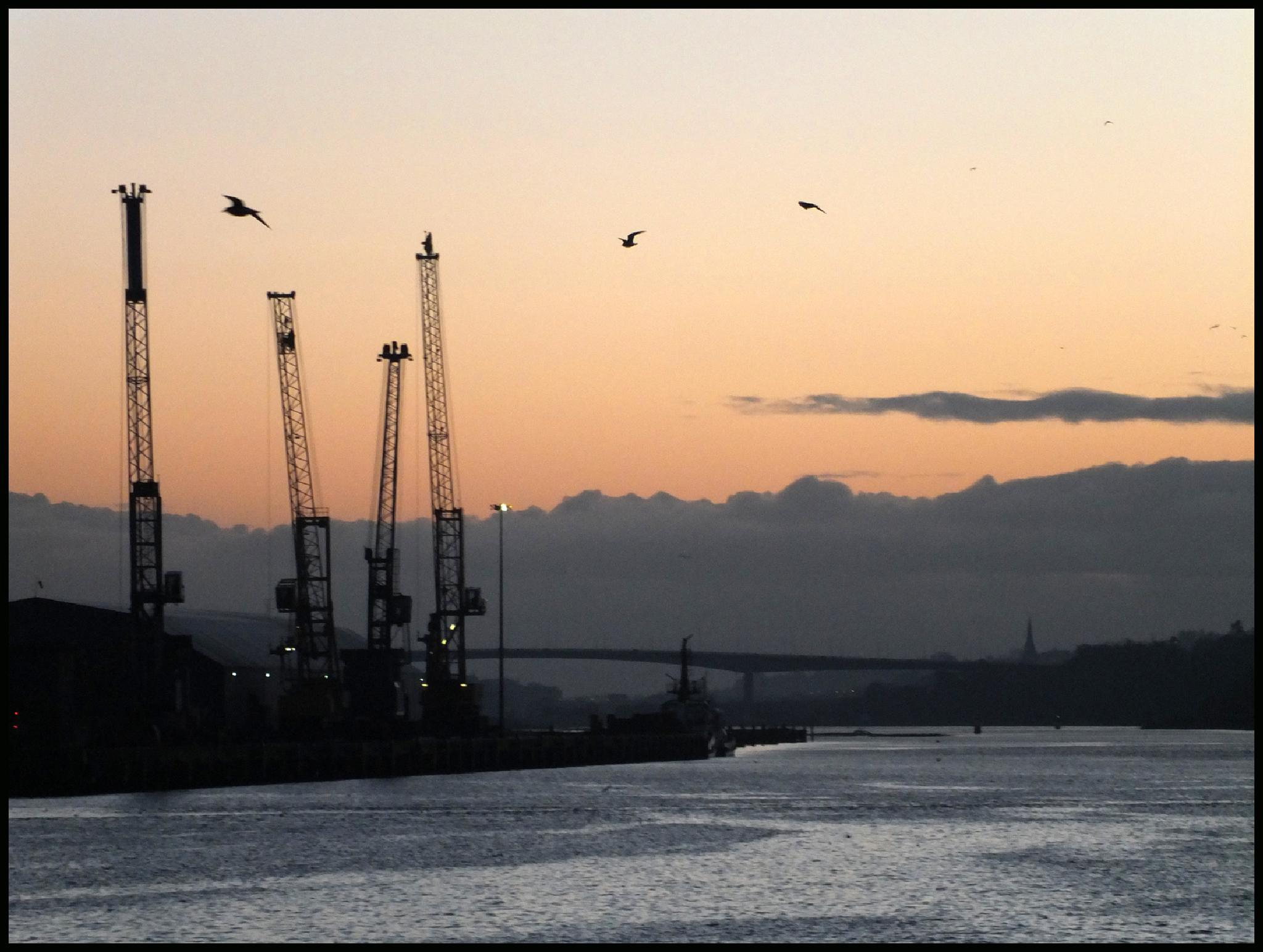 Photo in Sea and Sand #foyle #lough #sea #twilight #evening #cranes #port #derry #gulls #flight #ireland #ulster #donegal #cloud #bridge #spire #cityscape #industry #coal