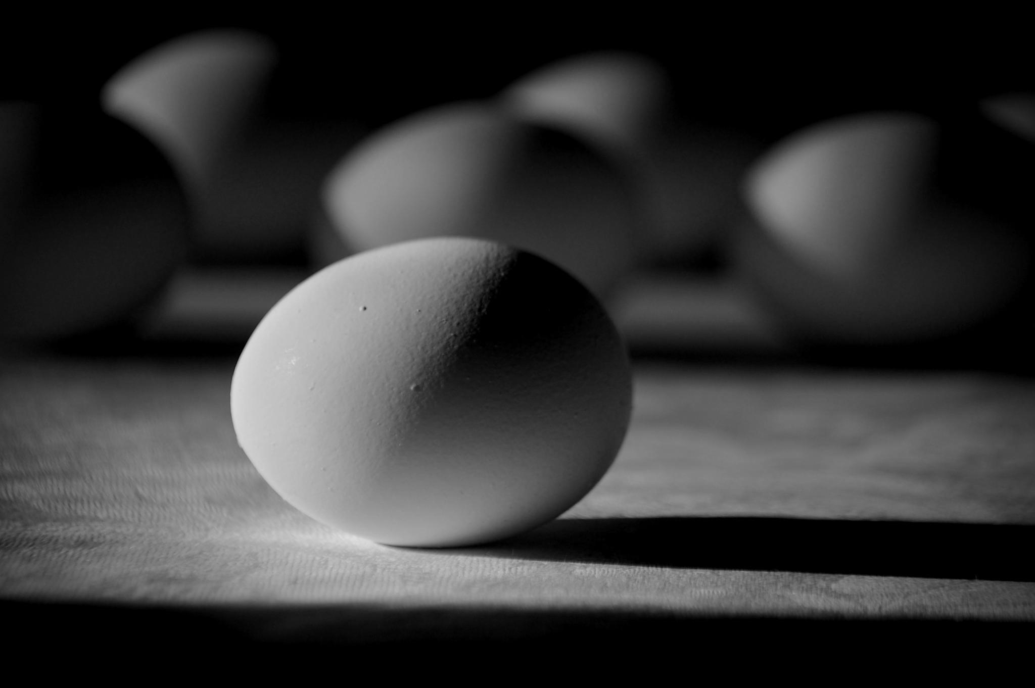 Egg by KristinaW
