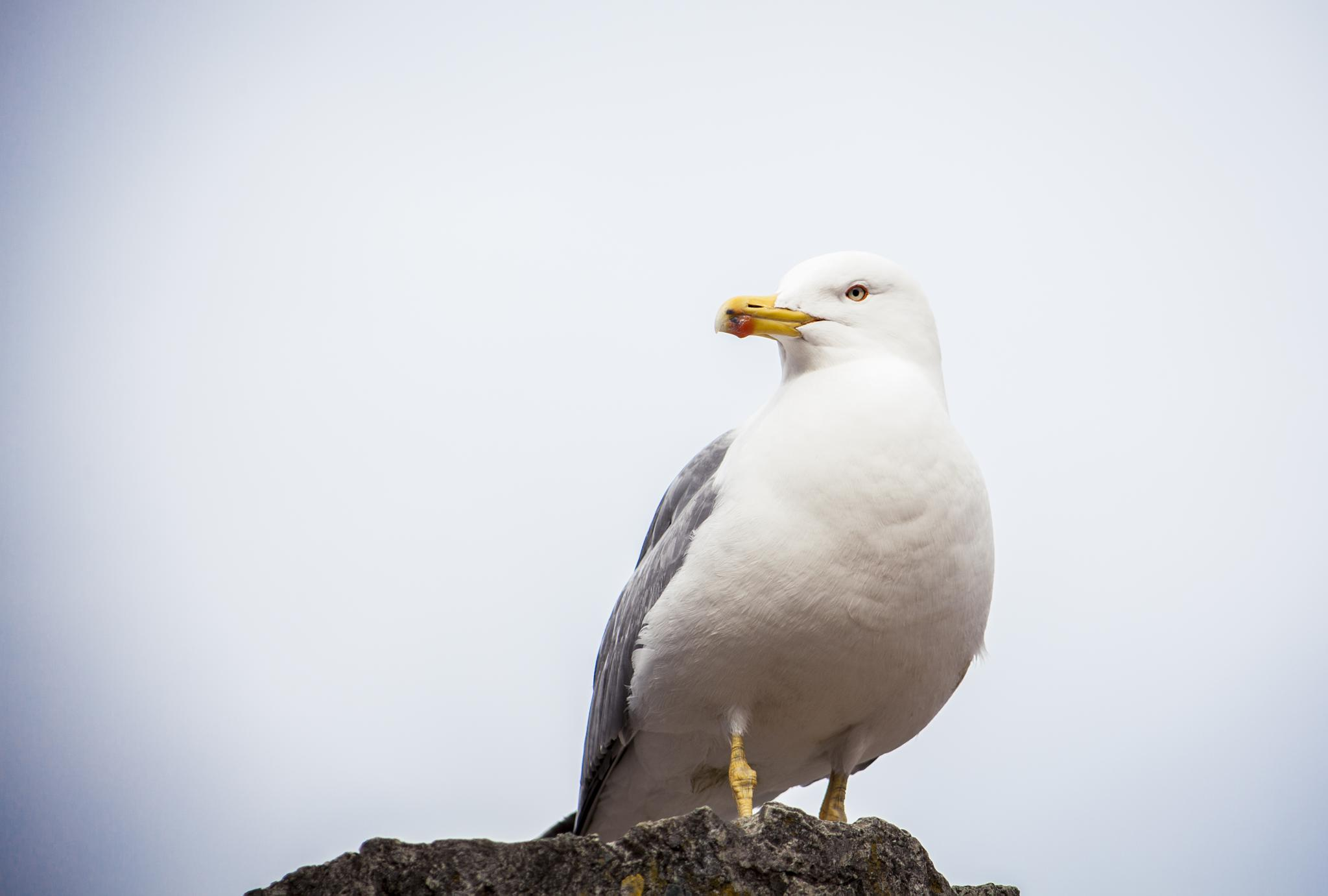 Seagull by Moments By Thagaard