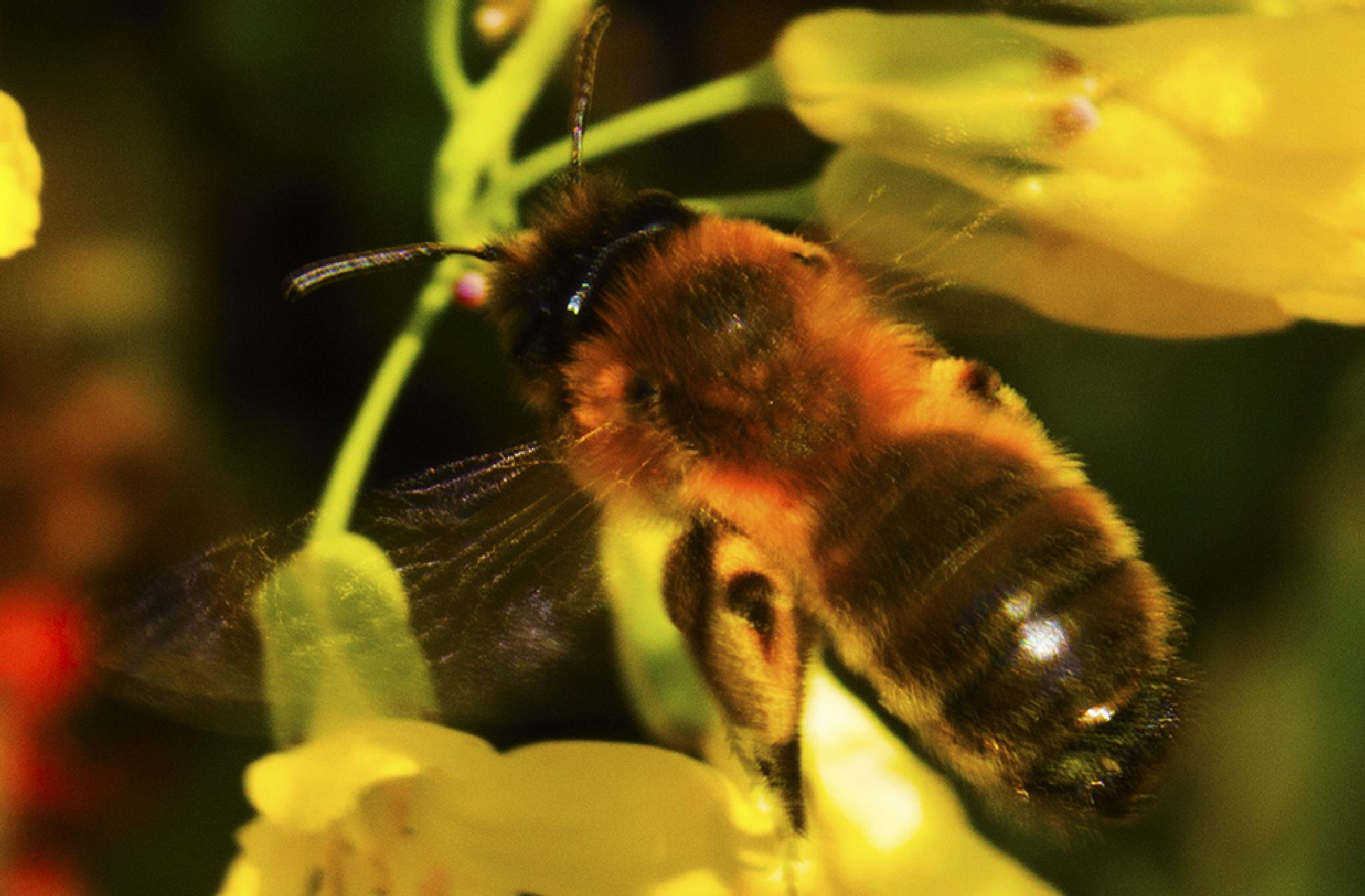 Moving Bee by Saami Powell