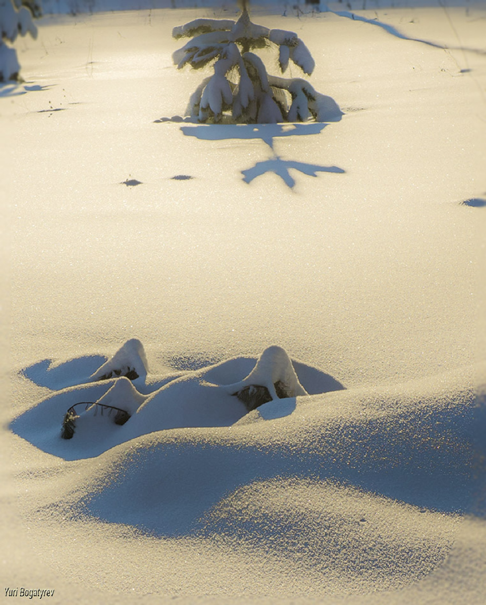 Снег и тени by Юрий Богатырев