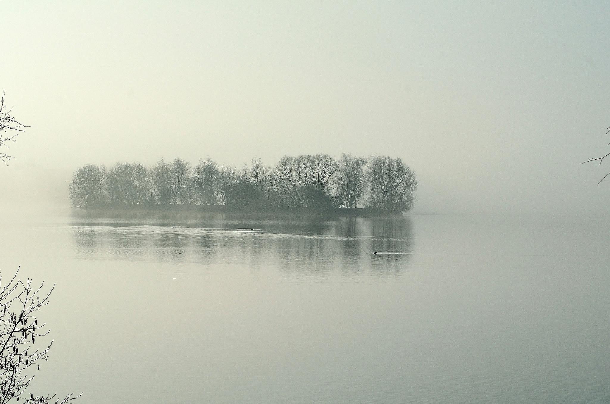 Spooky misty morning by Henk Meima