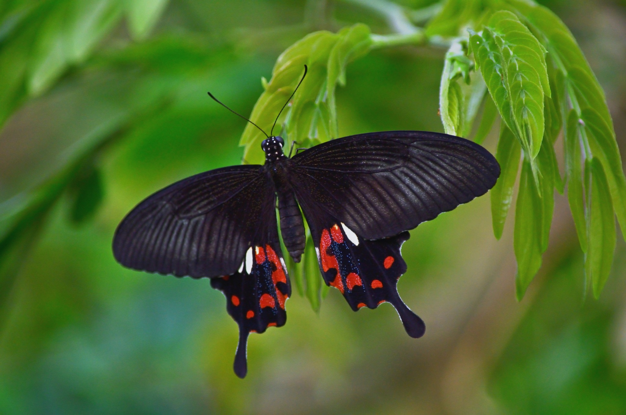 Beautiful butterfly don't know the name  by Henk Meima