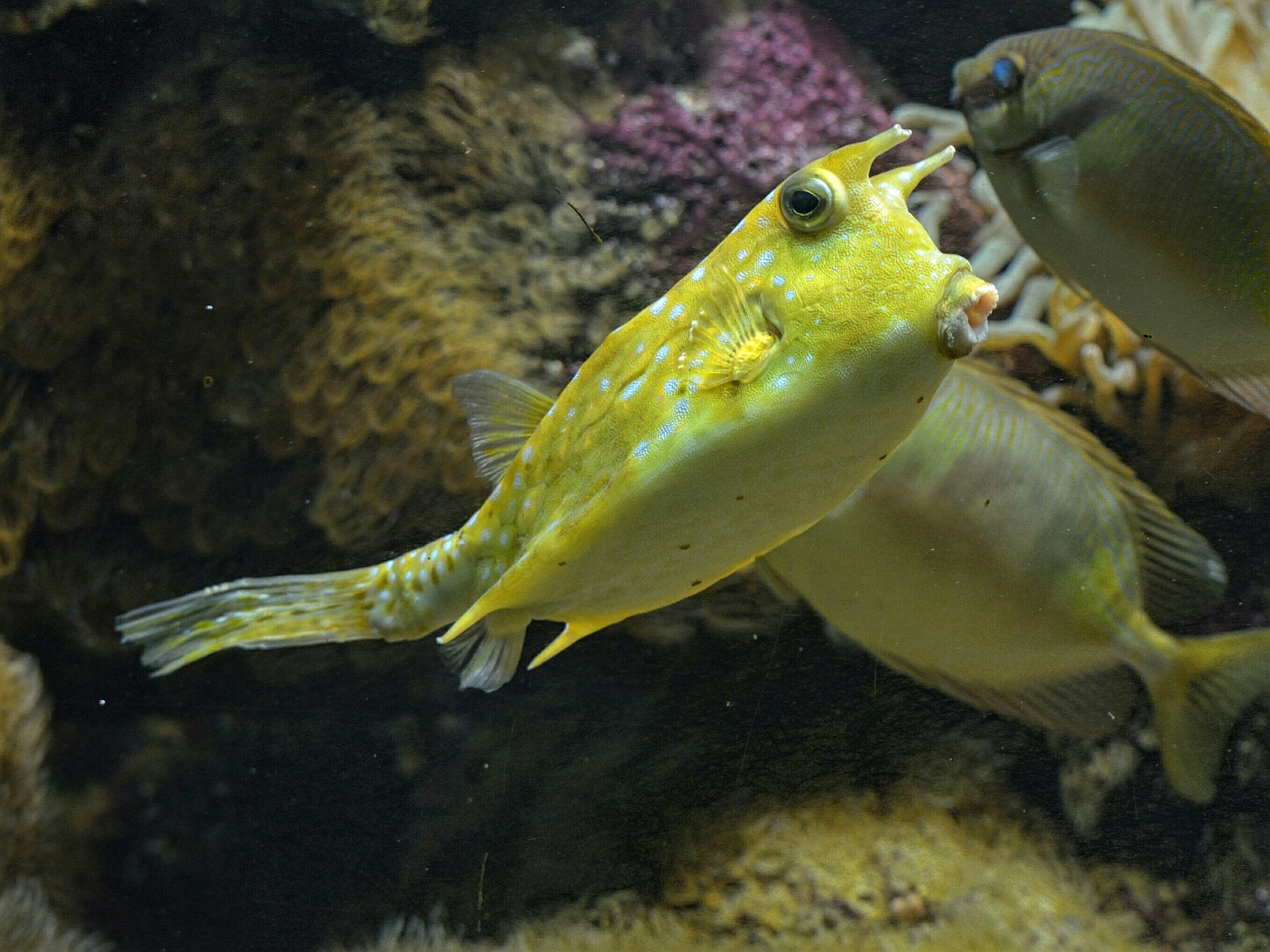 Can anyone name this fish by Henk Meima