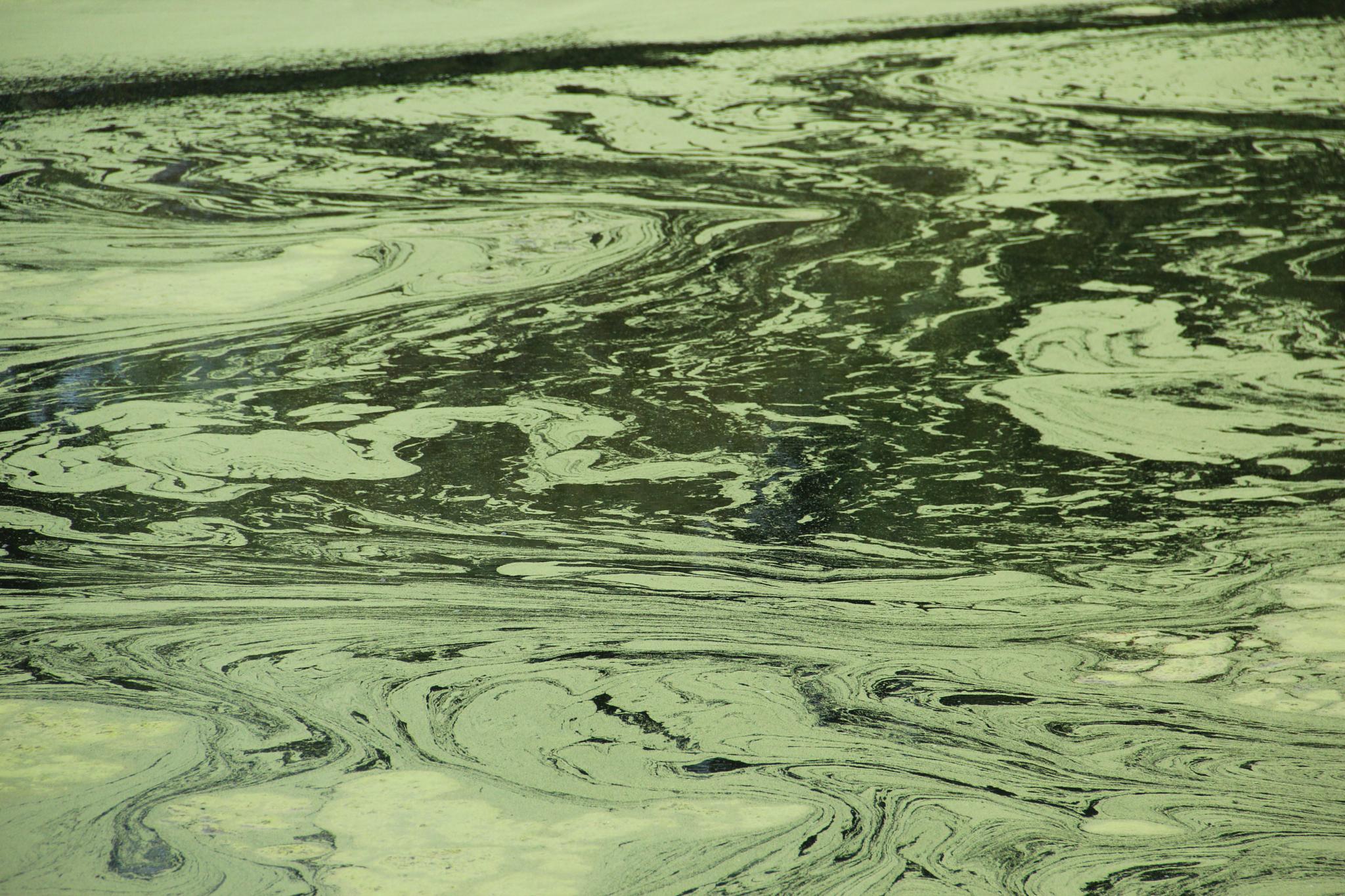 Marsh by Kaveh