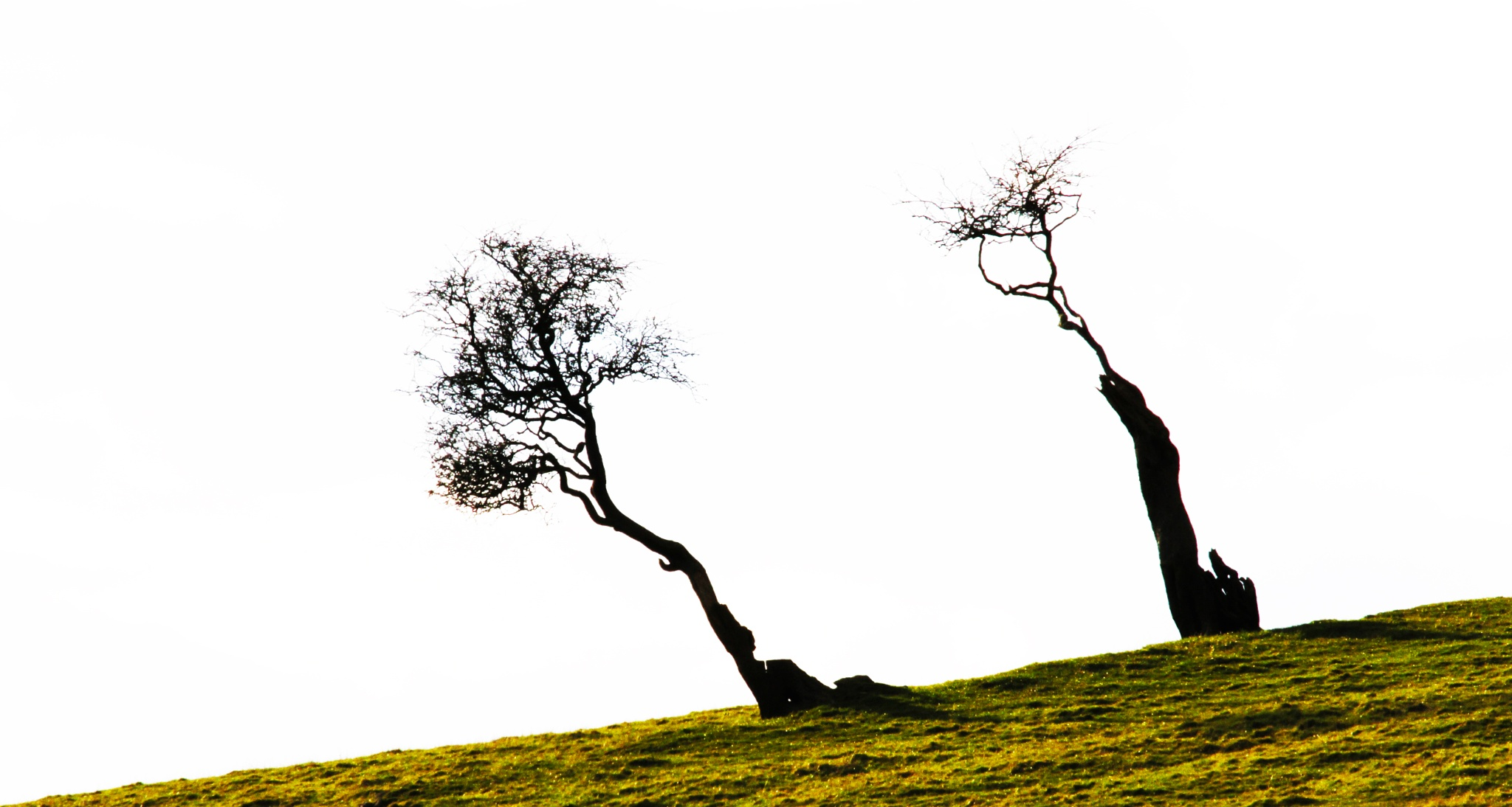 """trees"" by steveworrll"