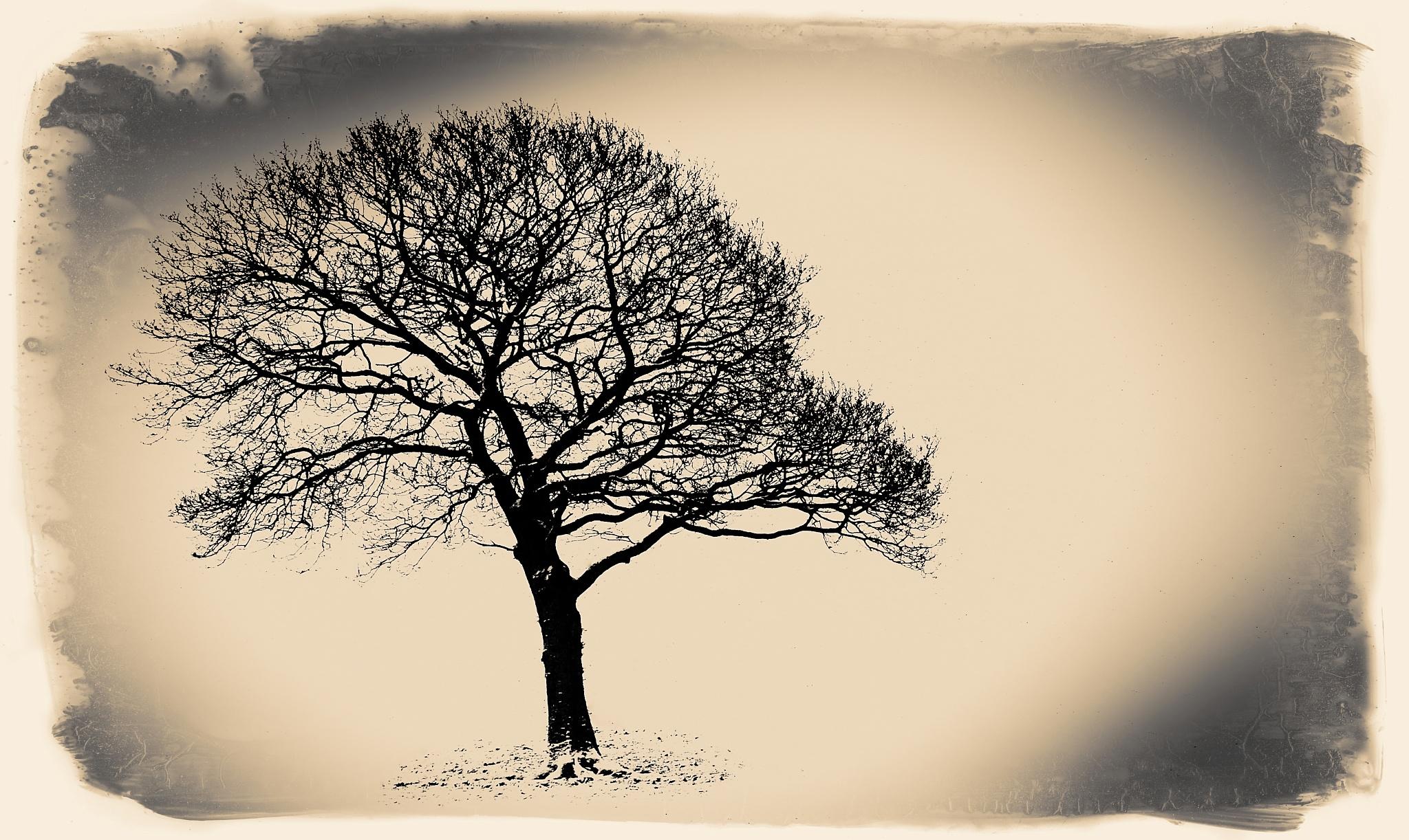 a winters tree by steveworrll