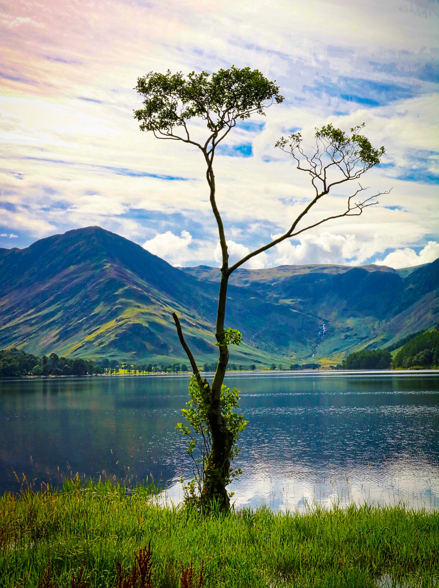 A lonely tree at Buttermere by steveworrll