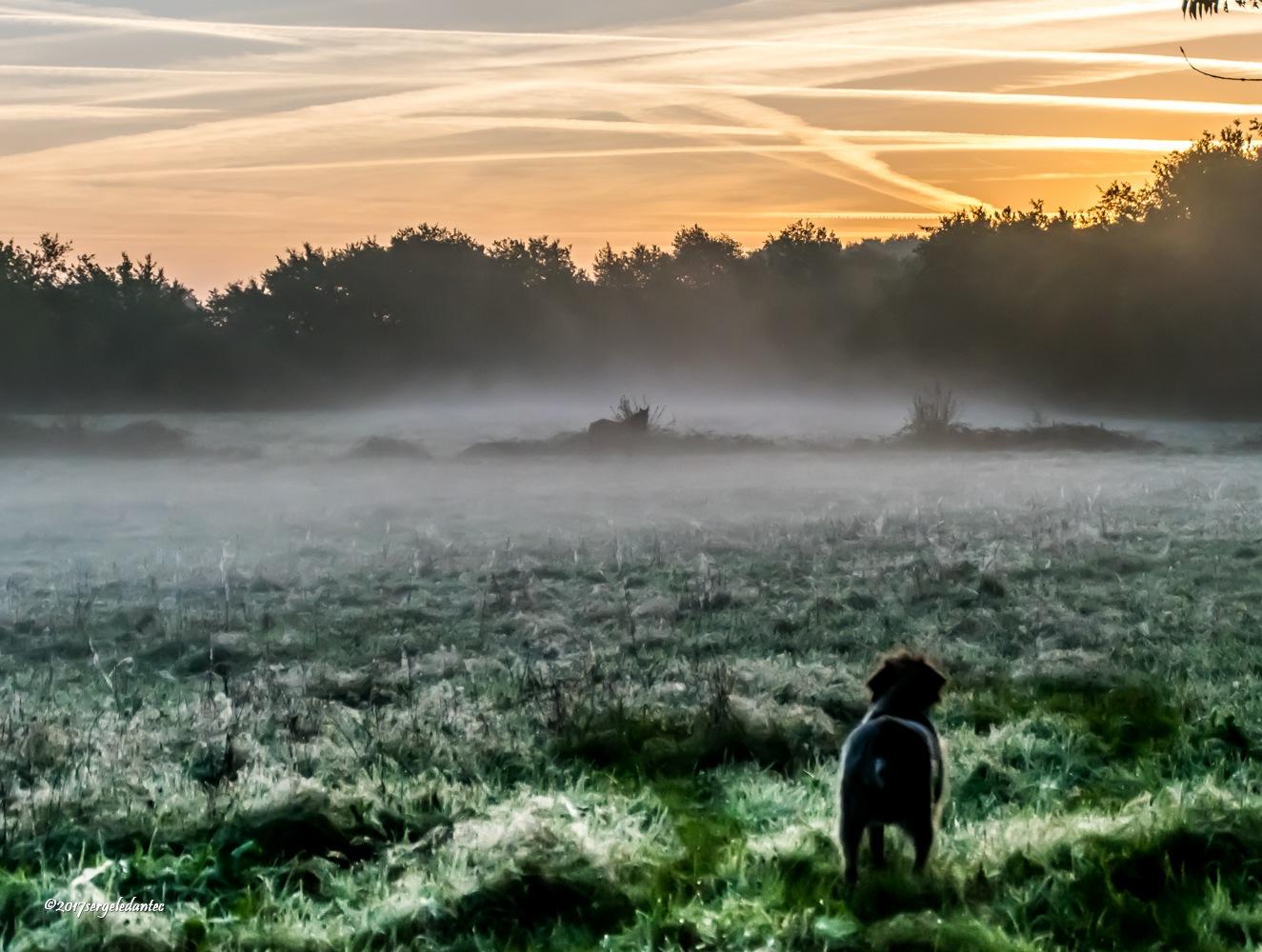 Dans la brume.... by serge ledantec