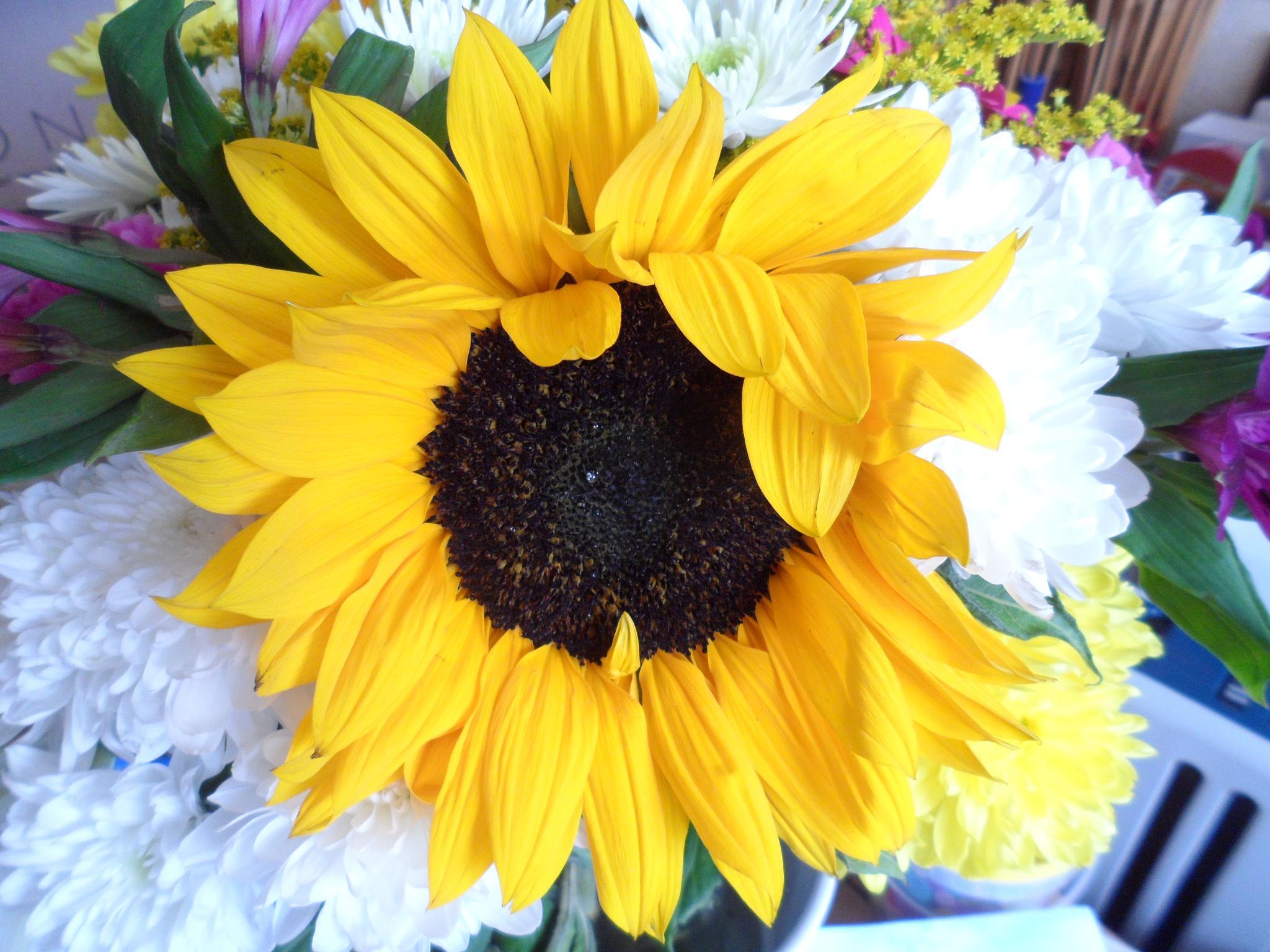 Sunflower in a bouquet  by BeverleyForsyth