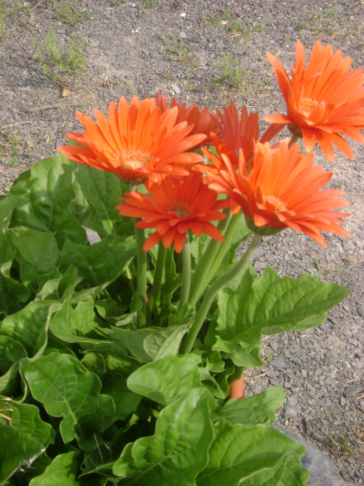 orange blossoms by Diana Marenfeld