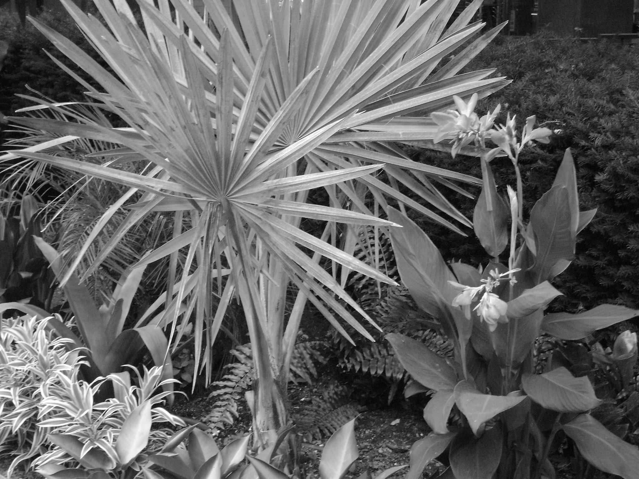 Exotic plants B/W by Diana Marenfeld
