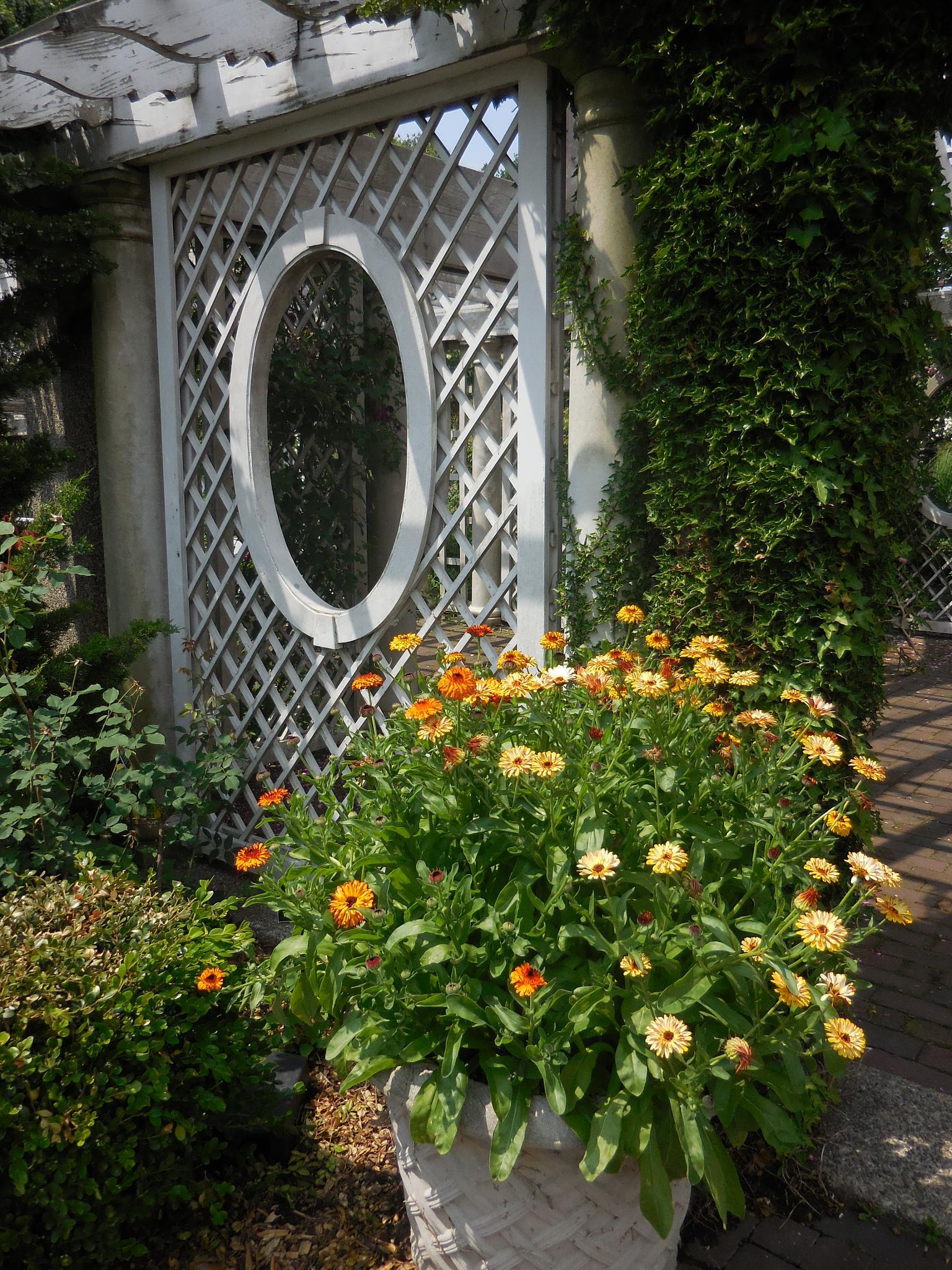 garden view by Diana Marenfeld