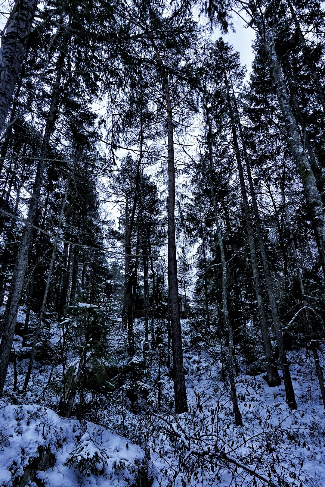 Forrest by kenneth.andersen.5245