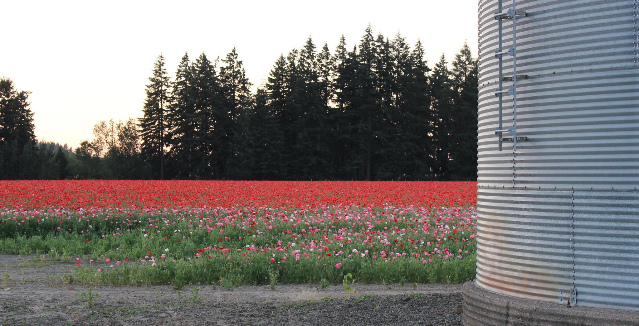 Flower silo by danial.floyd