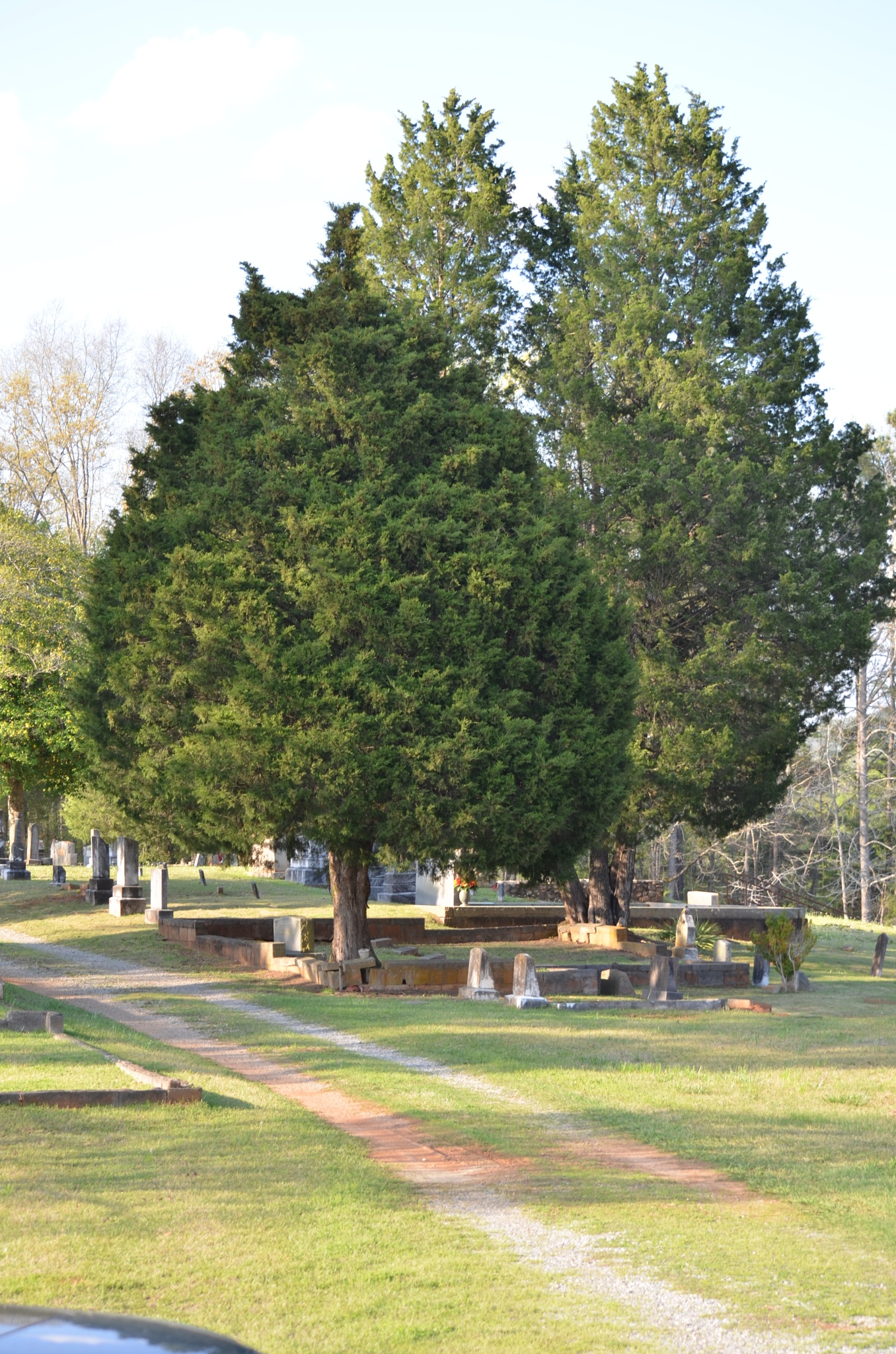 Photo in Landscape #cemetery #cedars #trees #graves #old