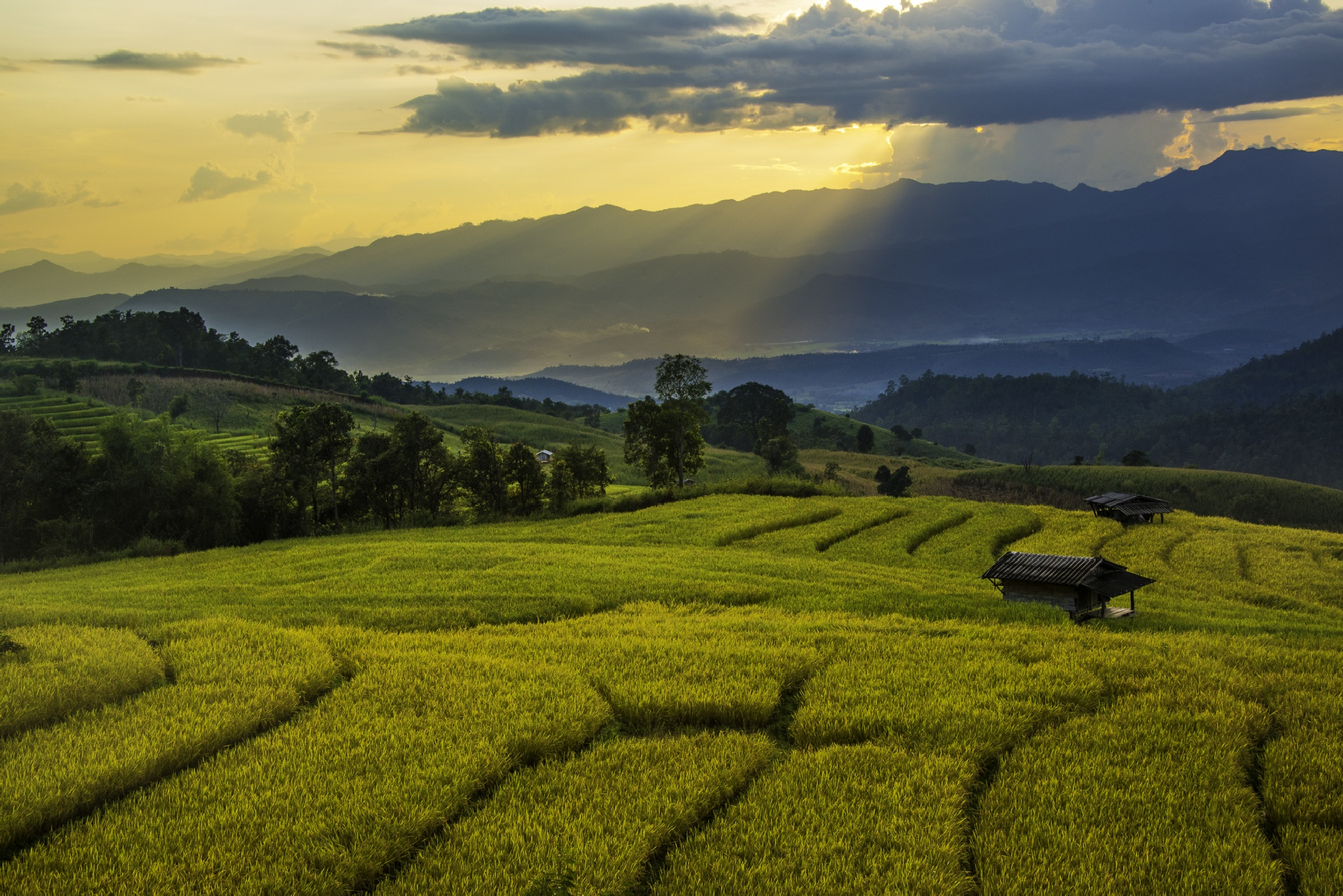 Rice fields at sunset by Danny Alexander
