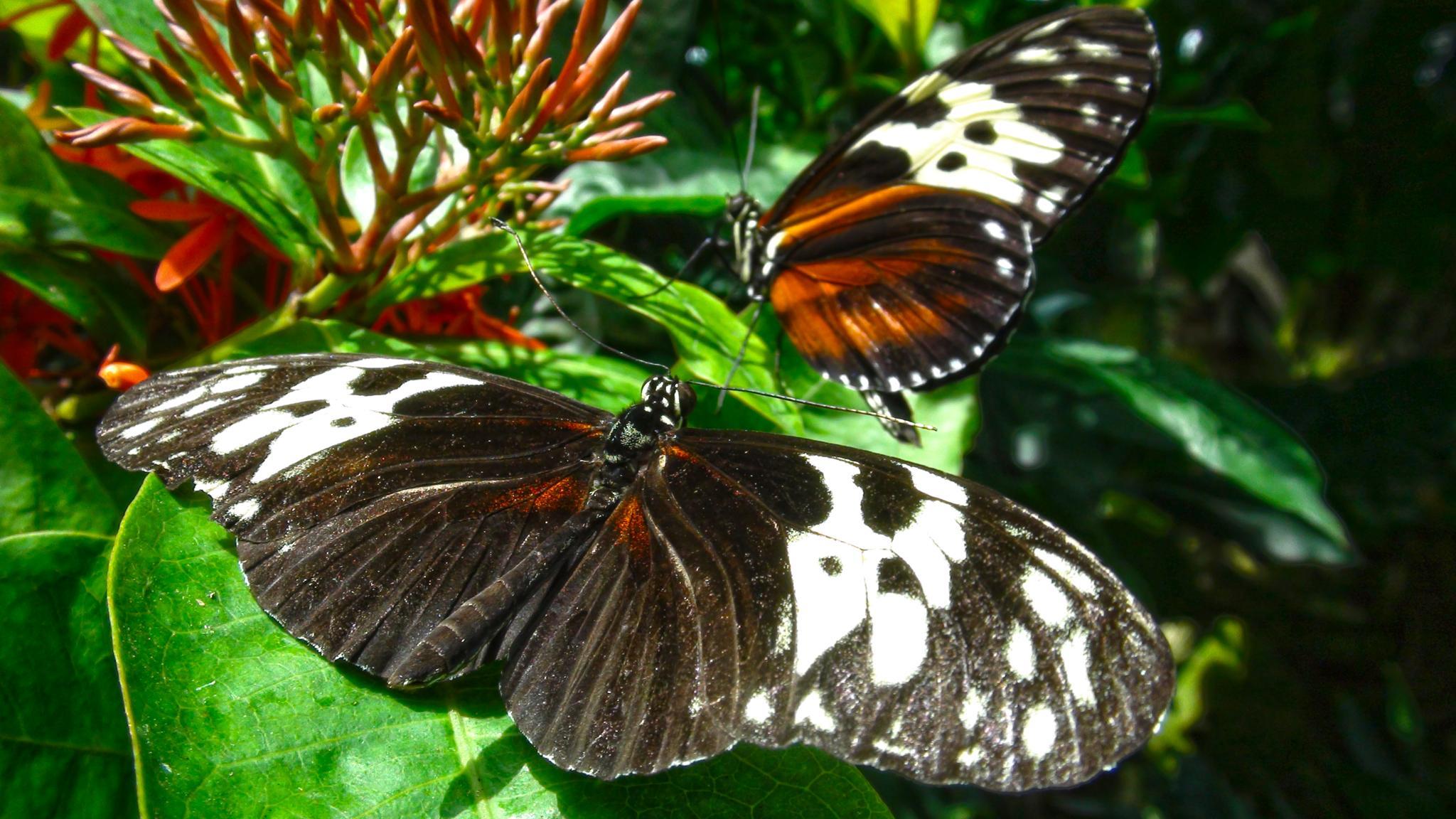 I Love Butterflies by ʎpɐן uɐıpɐuɐɔ