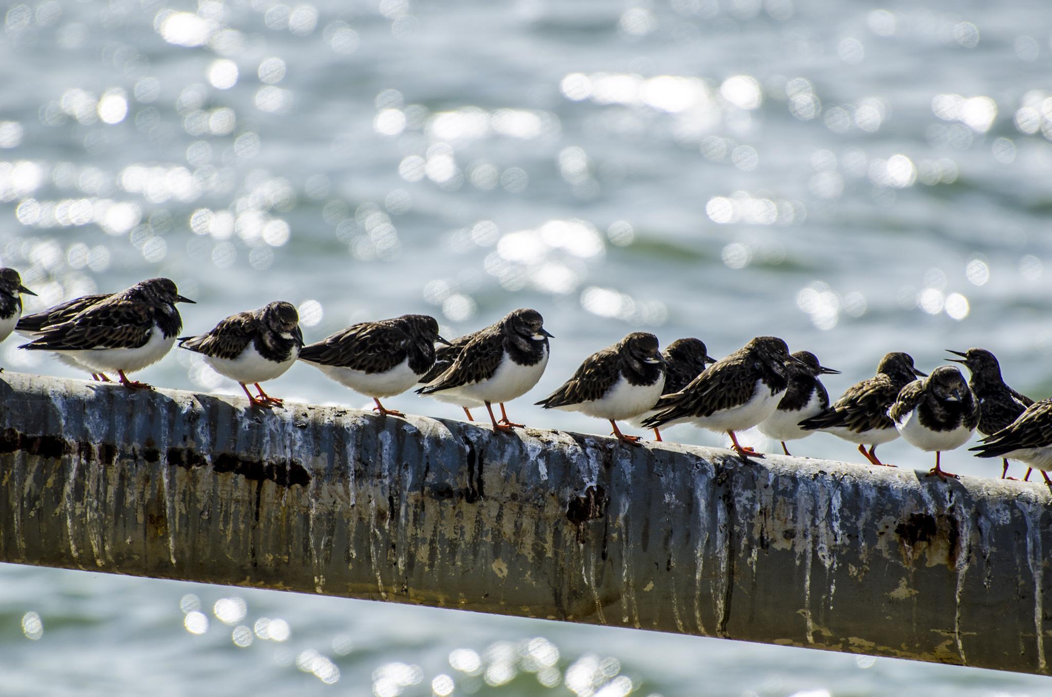 birds on boat by martin.webb.9