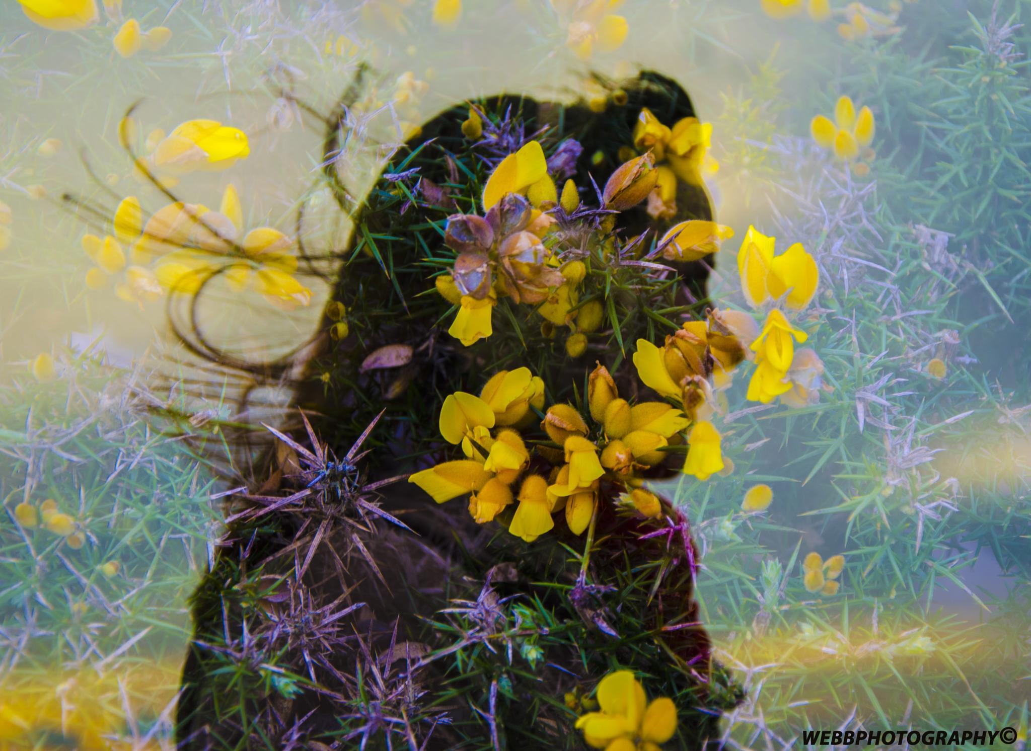 woman in bush :) by martin.webb.9