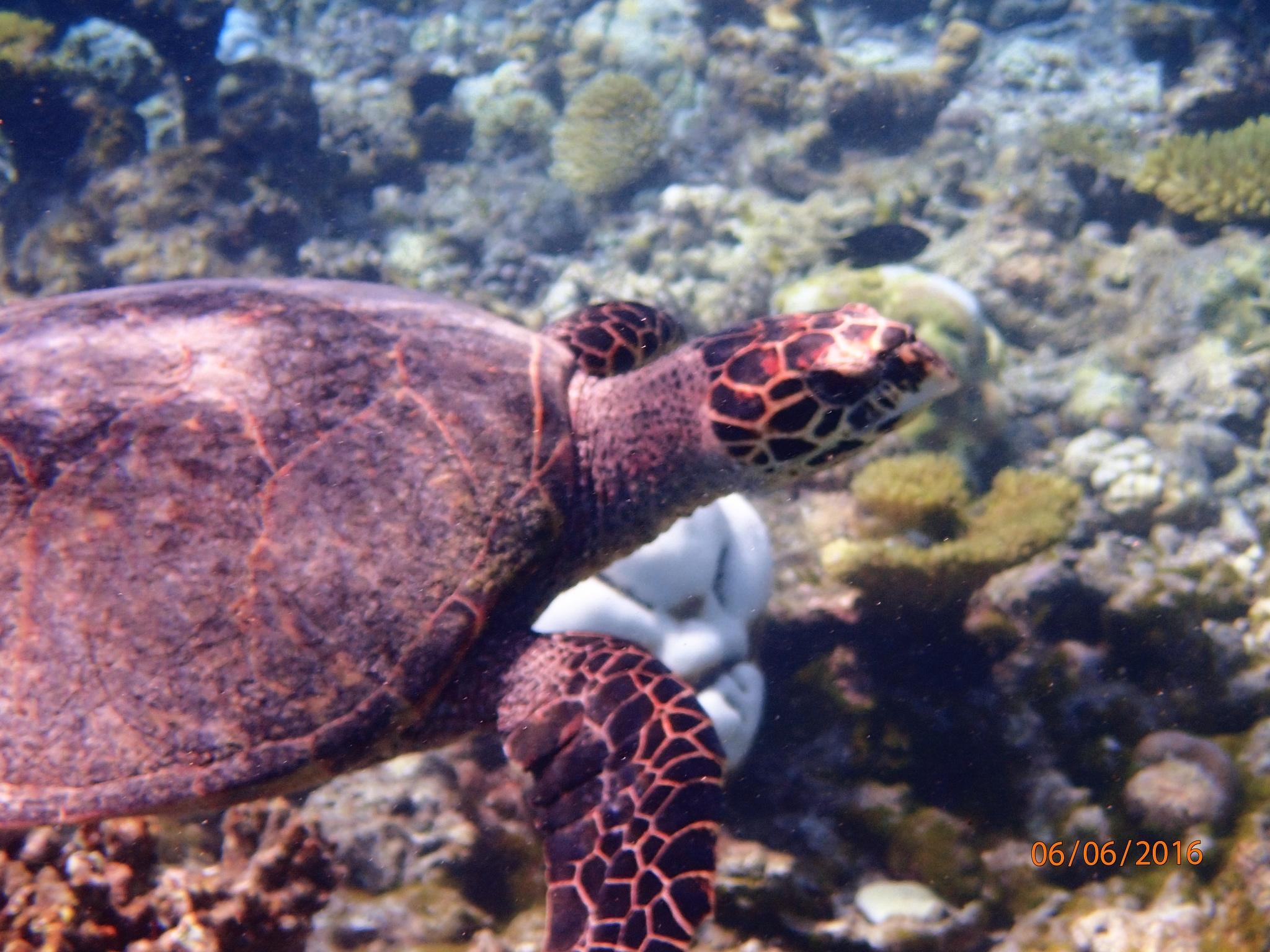Photo in Random #turtle #turtle2 #turtle3