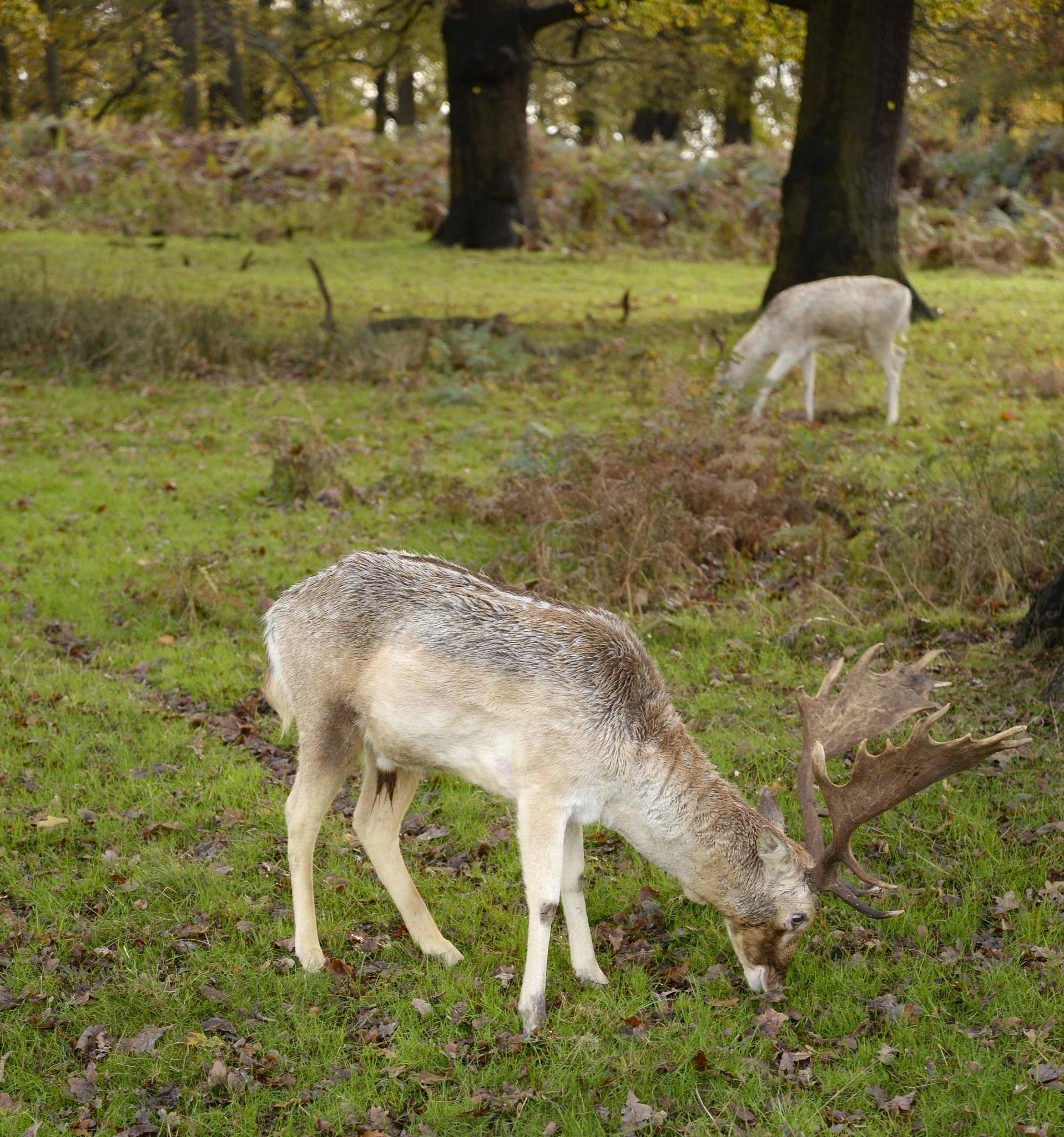 Oh Deer by trevor keville