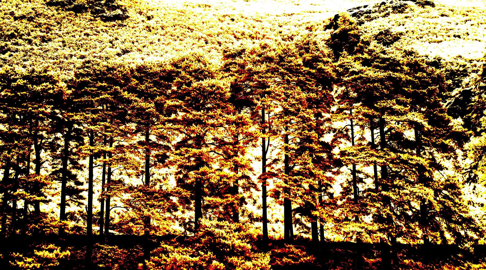 Autumnal Colour by trevor keville